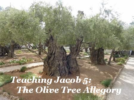 olivetrees Ideas for Teaching Jacob 5: The Olive Tree Allegory