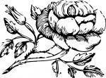 Mia Maid Rose Class Symbol