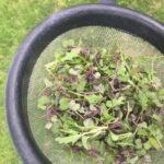 DB783FBE B13C 4ABD 880C 11E83E8FBCD7 Asparagus and Microgreens