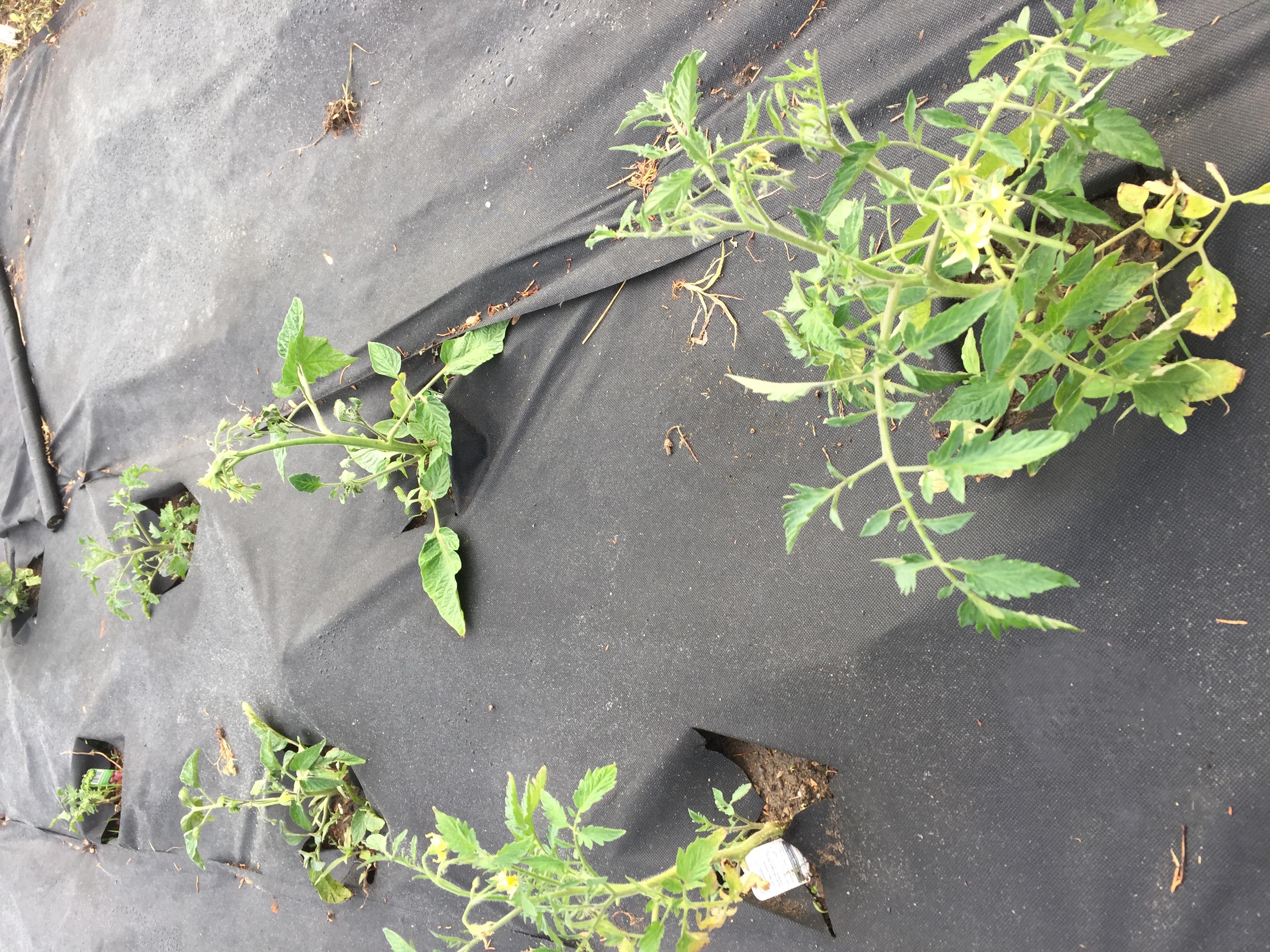 758E9575 EF96 416C 99F5 38CA6FA2A3E9 Irises, Roses, and Azaleas — Oh My!