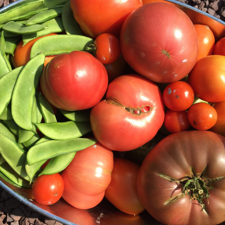 09747511 DA56 4083 B321 D166DB0241D1 Teeny tiny veg