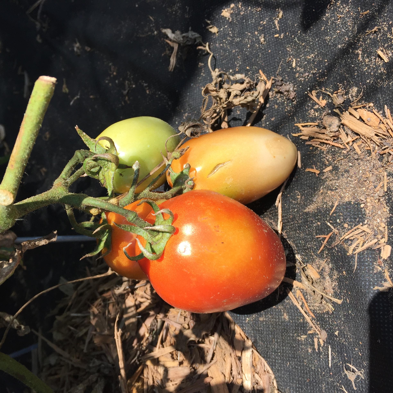 1AA2C983 F282 4E3A 8030 4C8B0416A7CE A big harvest!