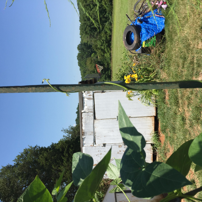 38BB4C7B E455 4AC2 9068 CC9857C9C904 A big harvest!