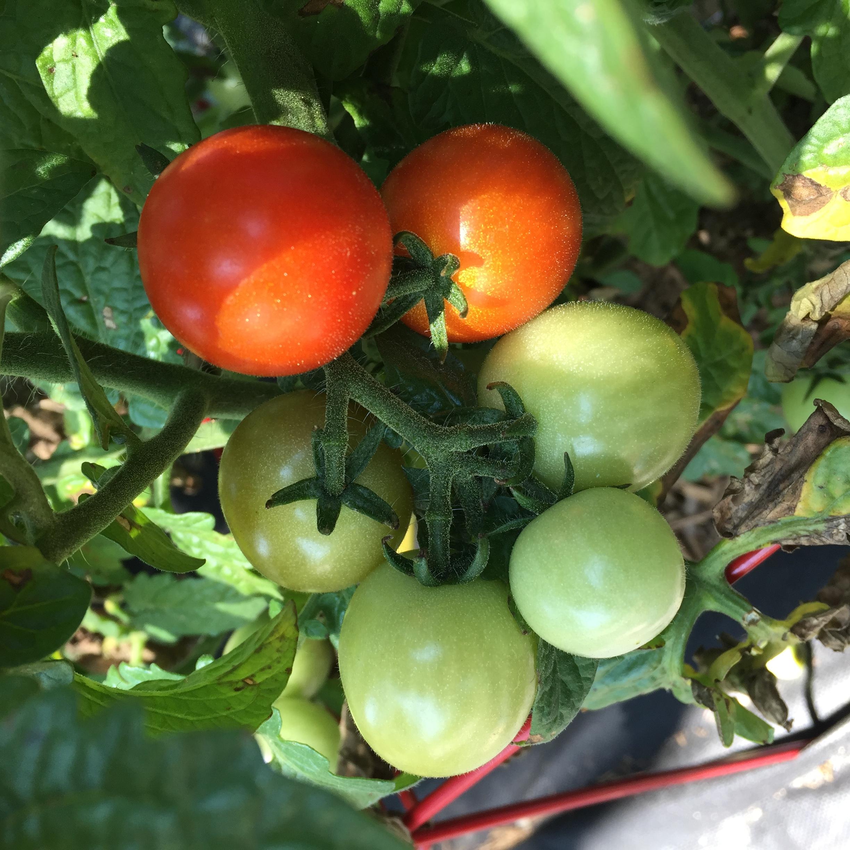 6622D26B 7A96 4ADD BB53 1917B5208BBD A big harvest!