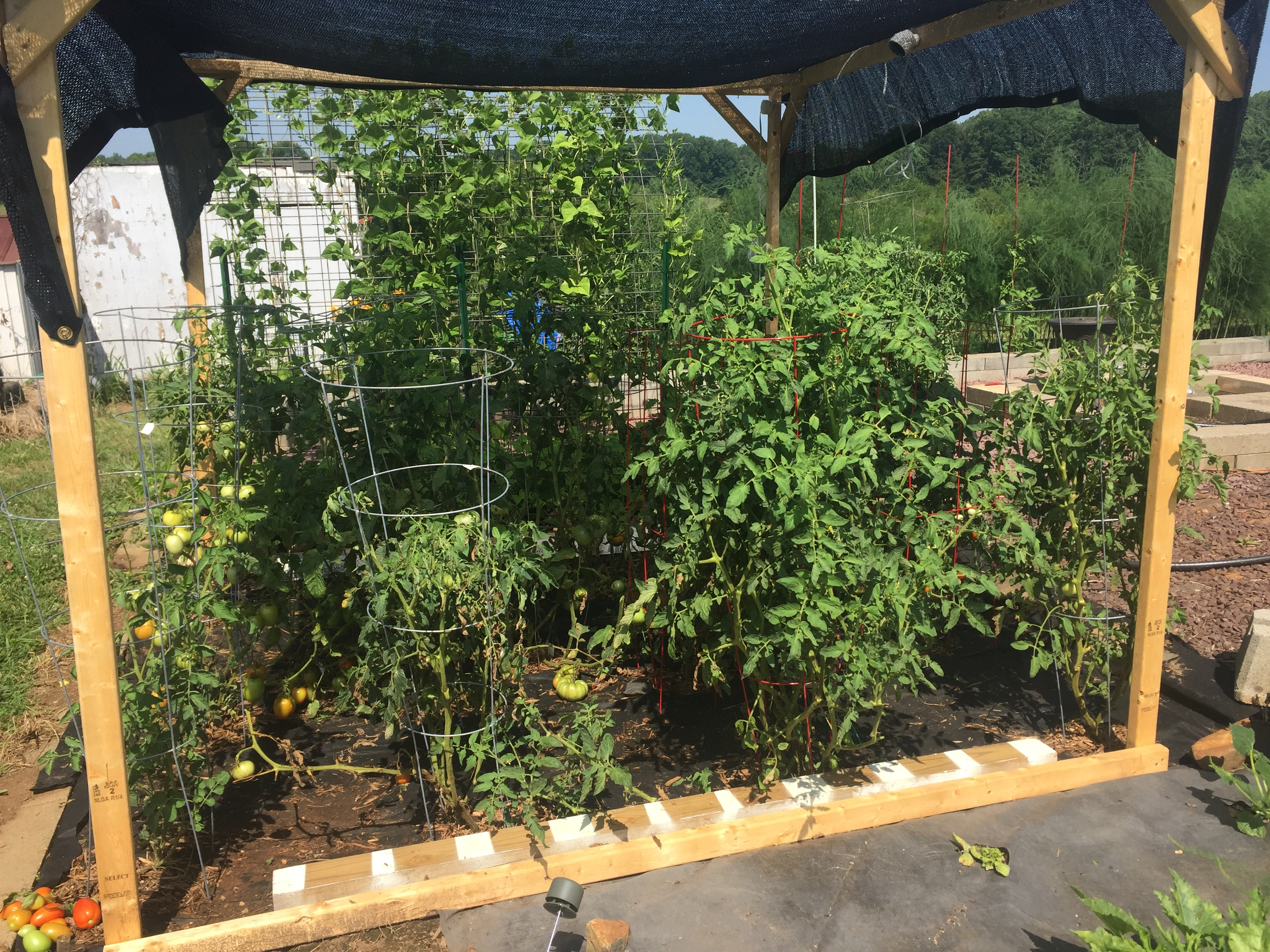 6AAA4F1C 3DAB 43B0 BD75 6A76B3F909CA How much pruning is too much?