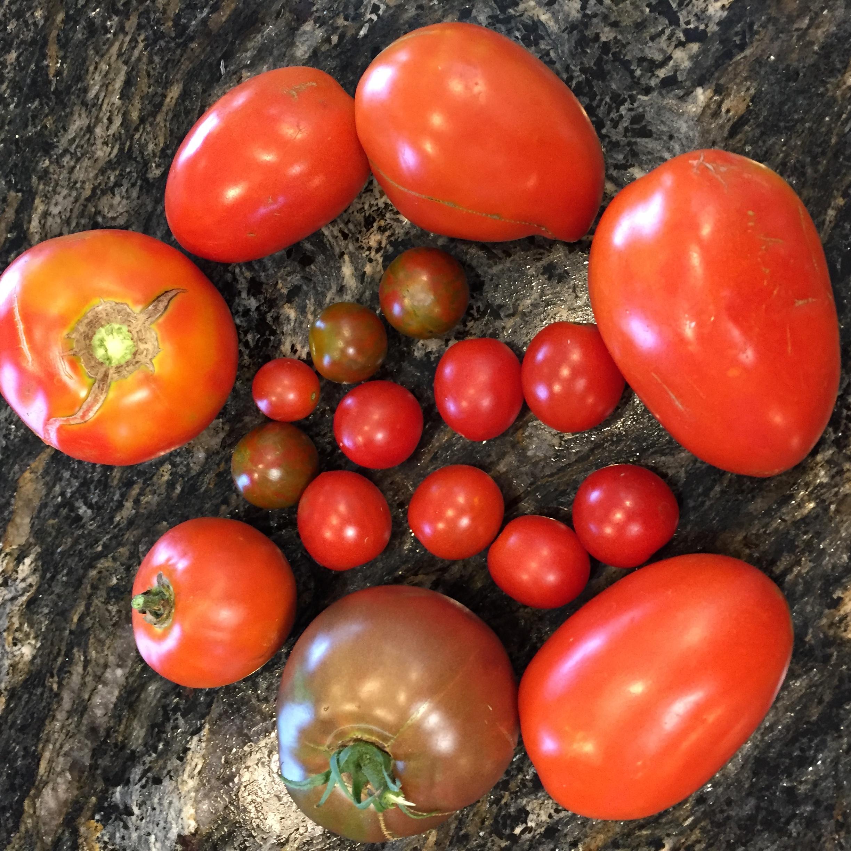 6F29C2C8 C845 42AC 9714 AD945E87ADA5 A big harvest!