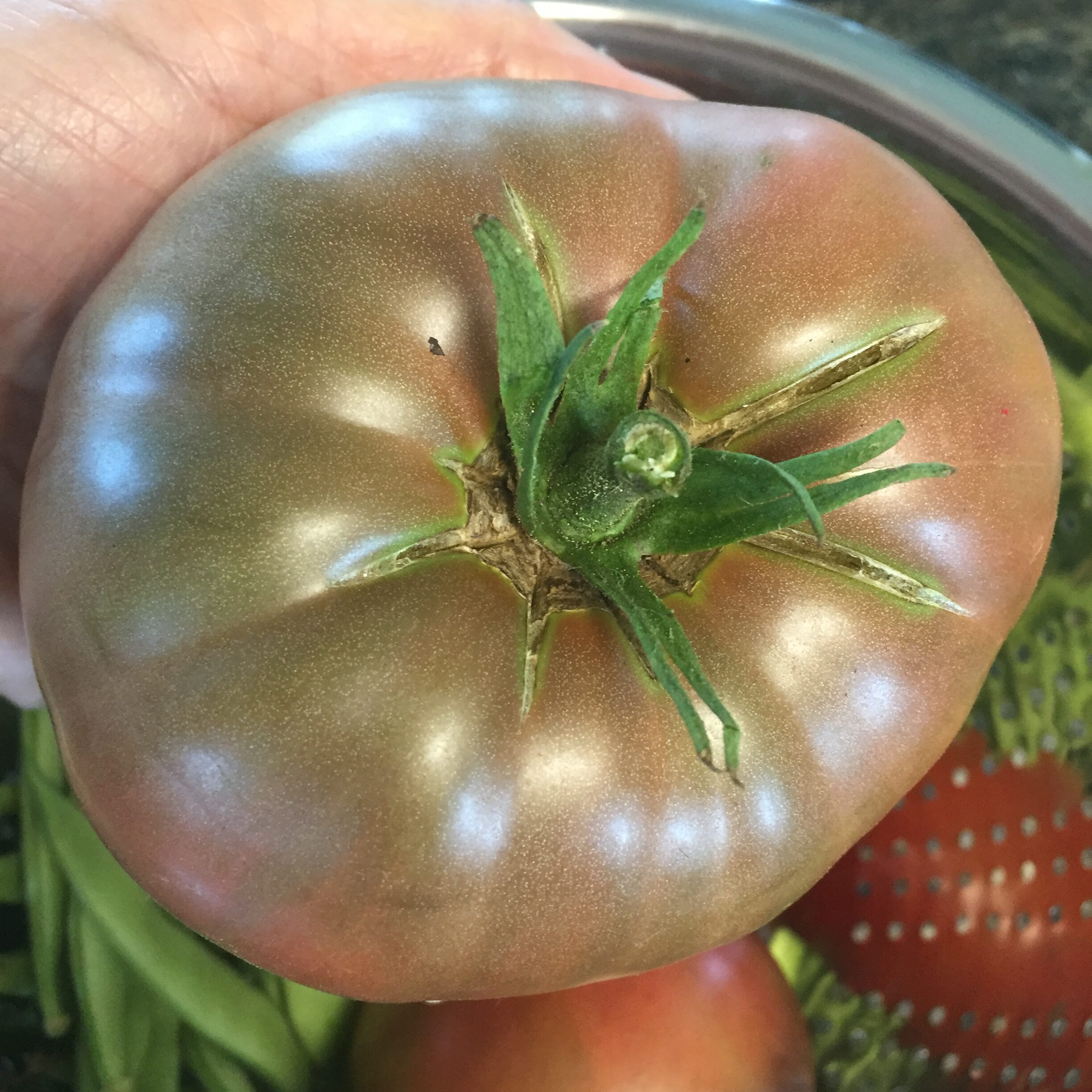 83E8336A 826B 48DB BDAC 344BB4688FE3 Bring your tomato to lunch day