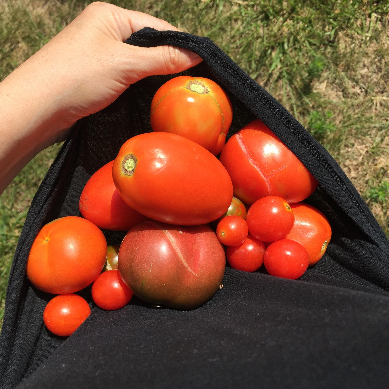 A1393D17 3B2E 4789 9E4A 3552F7A4BB21 A big harvest!