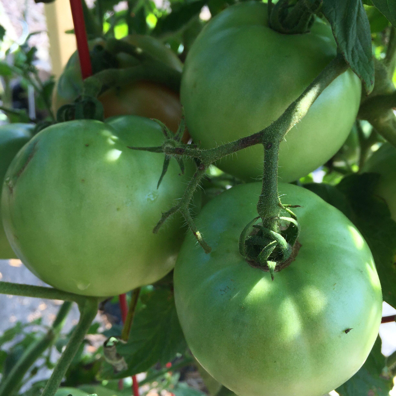 B3052941 0BE1 454F BC40 6391AFE0D3D1 Teeny tiny veg