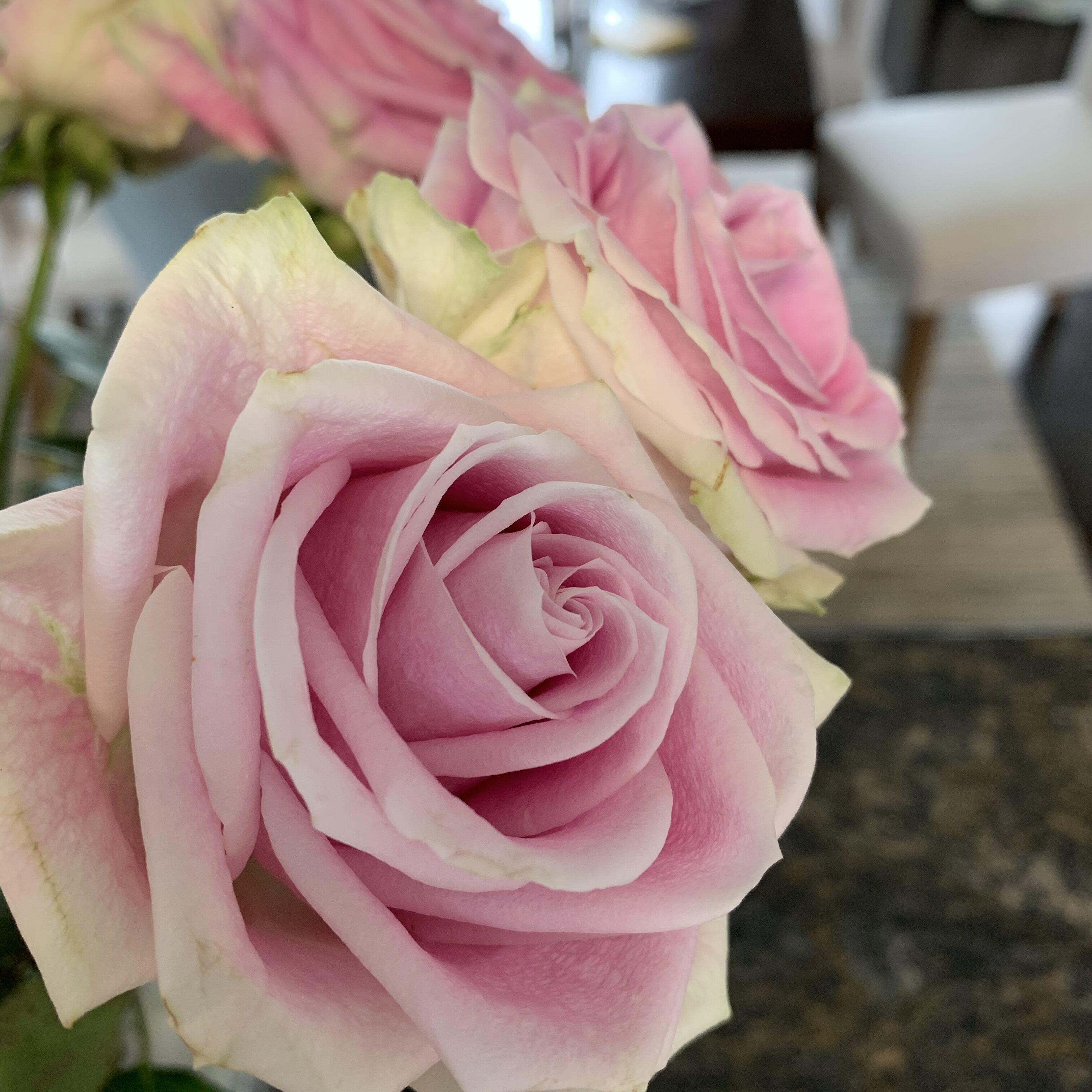 001AAF50 AFCA 44E7 A1A5 C3172DB5407E Roses