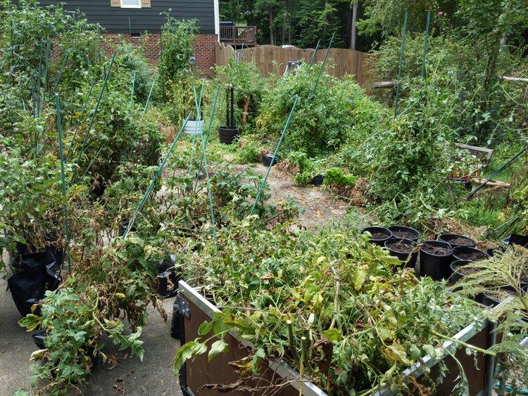 00BFA9AE 6B81 4ACE AB30 6B4A6F2E088F The carrots sprouted!