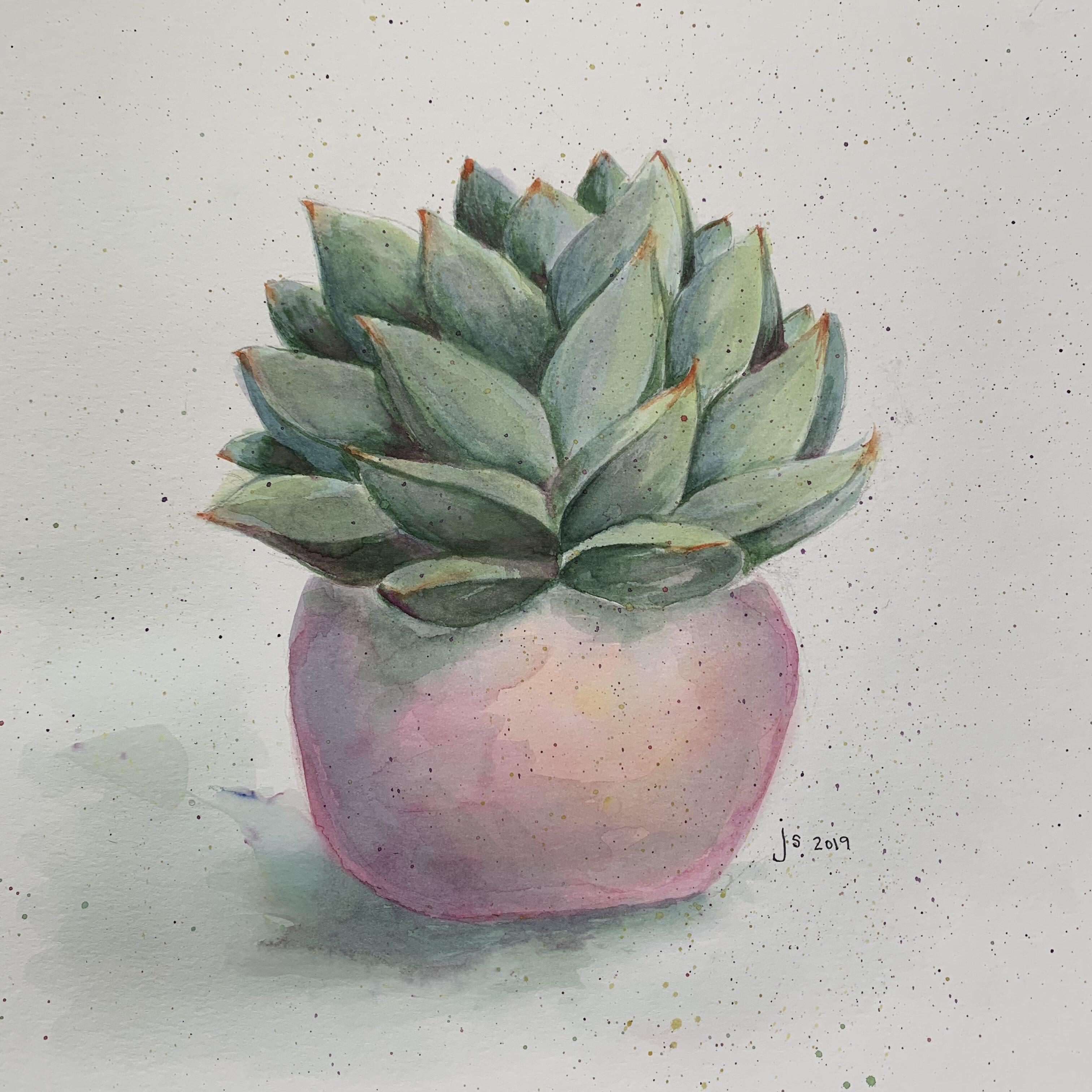 241B87EE 5681 4116 8A46 CDCE2C290020 Succulent in a pink pot