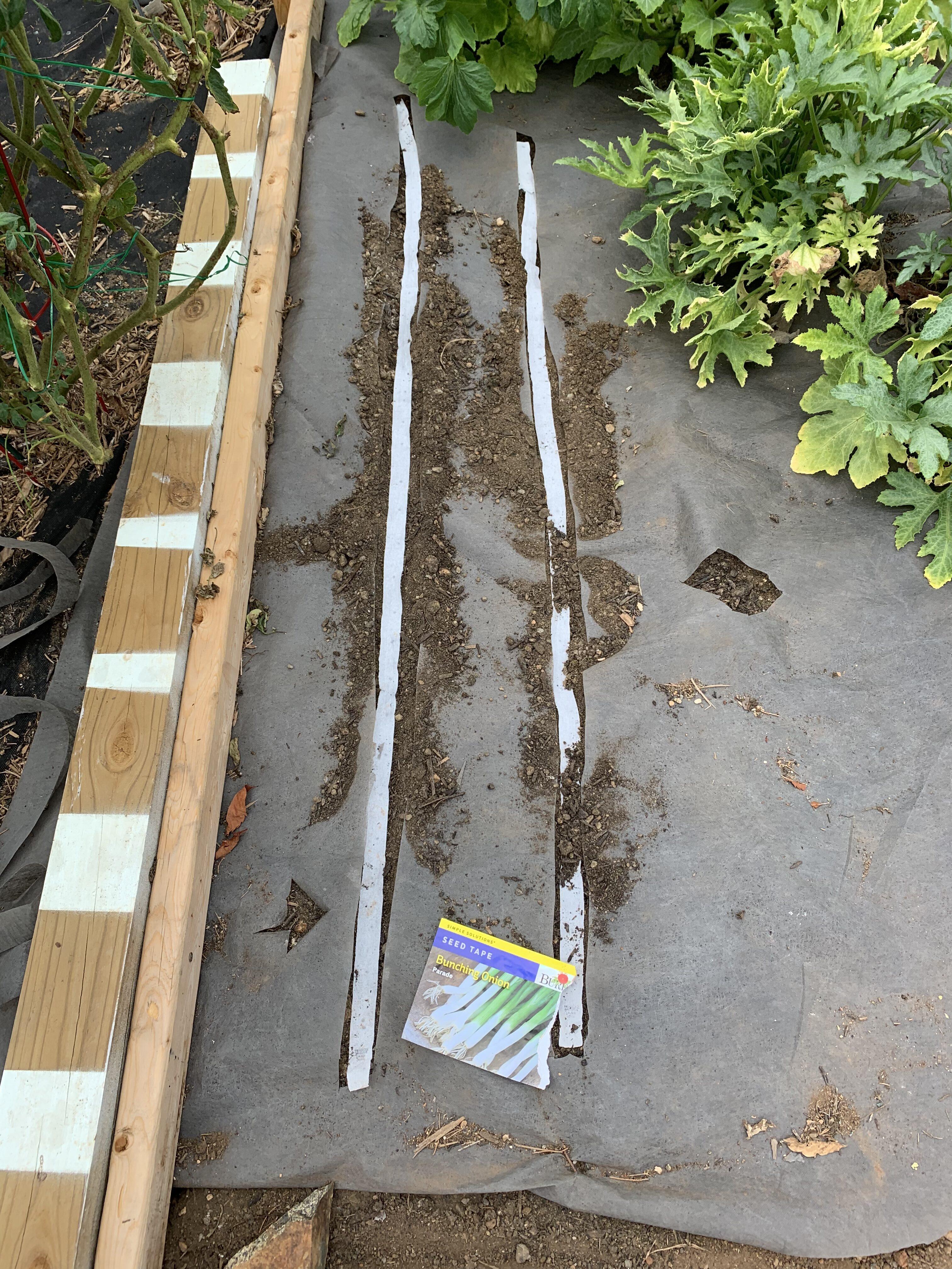 60FB4550 A2ED 40B0 B7CA A2369E1E69DC The carrots sprouted!