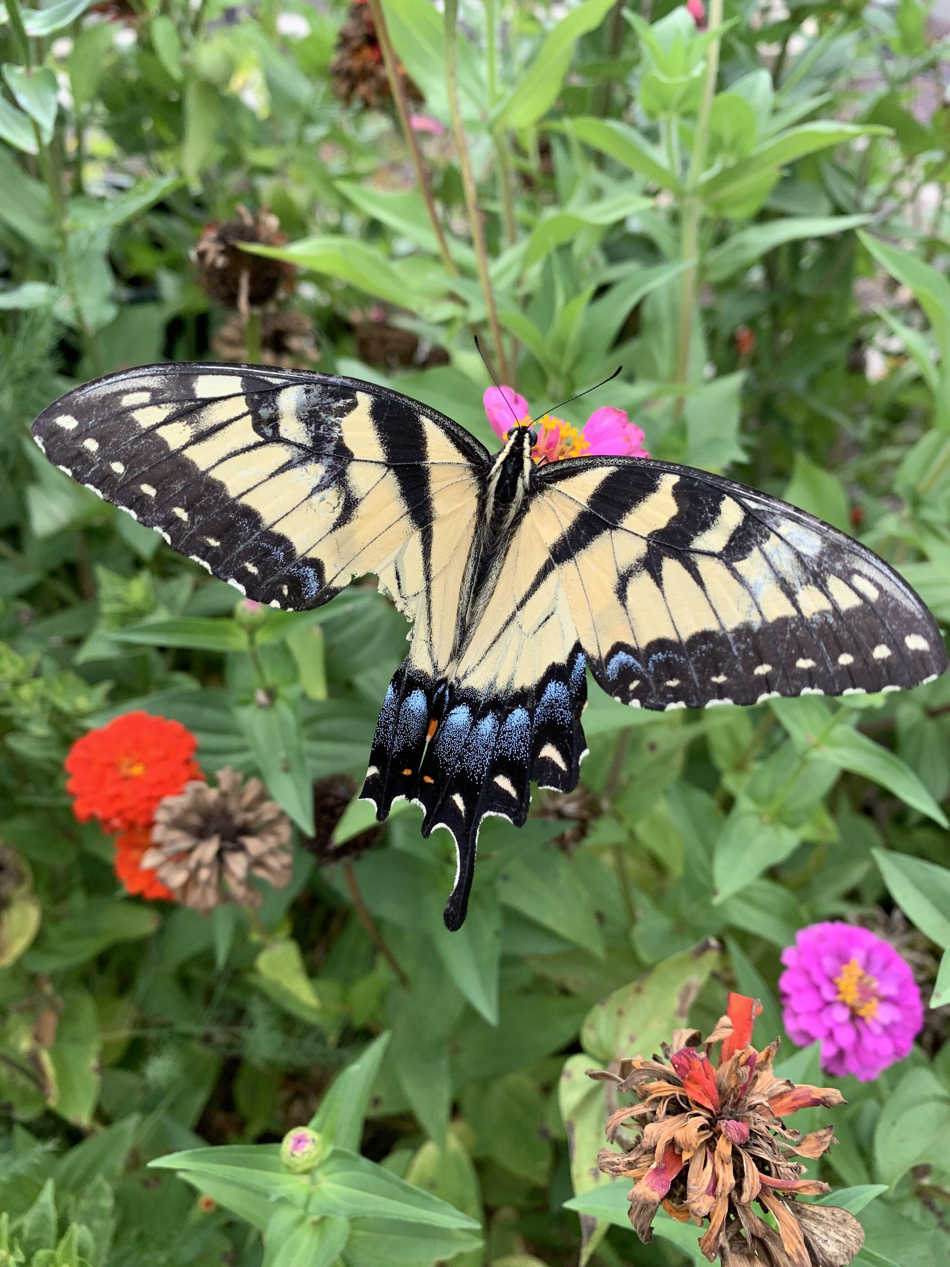 8FCC6945 4BF9 4D37 8D9F 692230386083 A broken butterfly