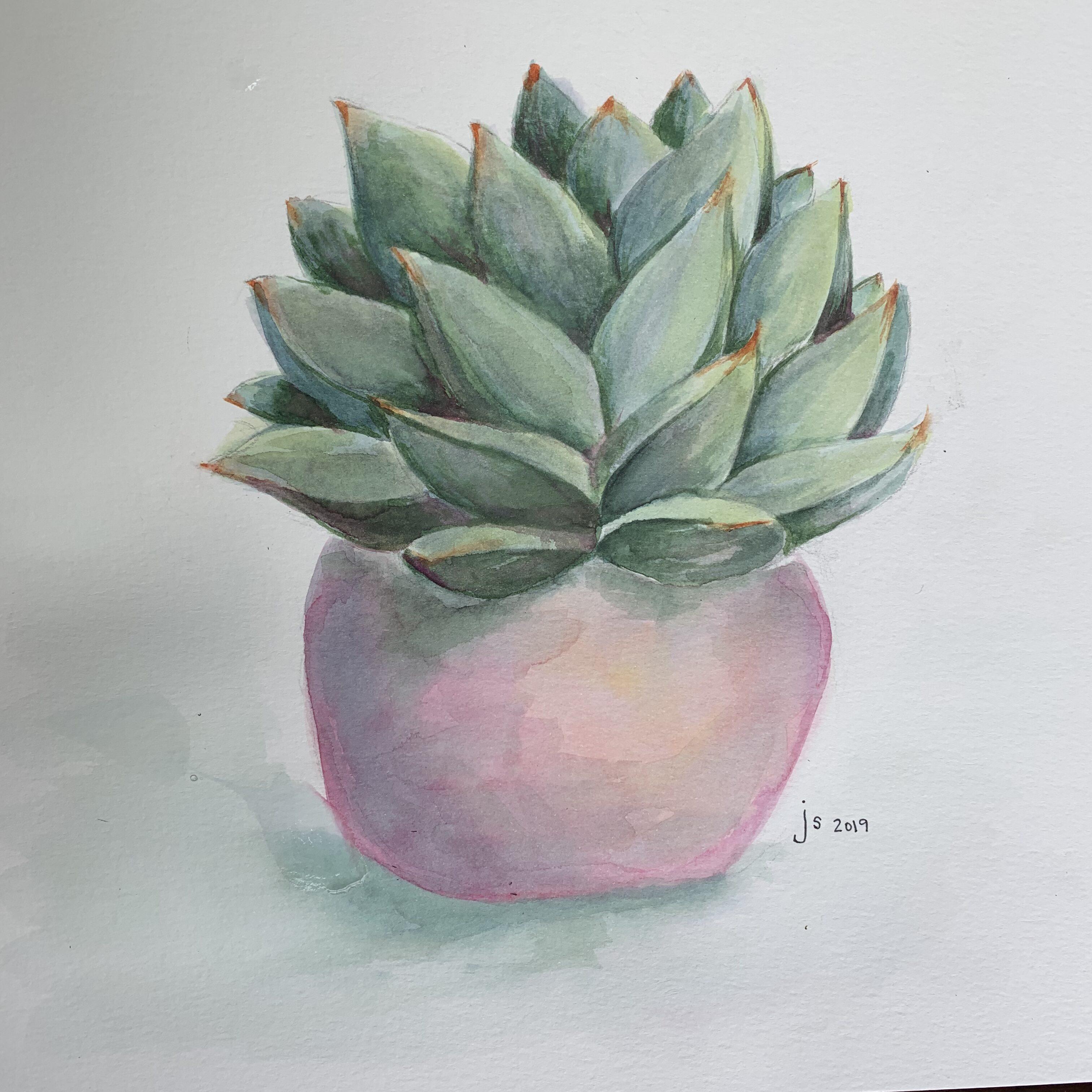C41A9BA1 317F 4328 8FCF 32C9A1E34B61 Succulent in a pink pot