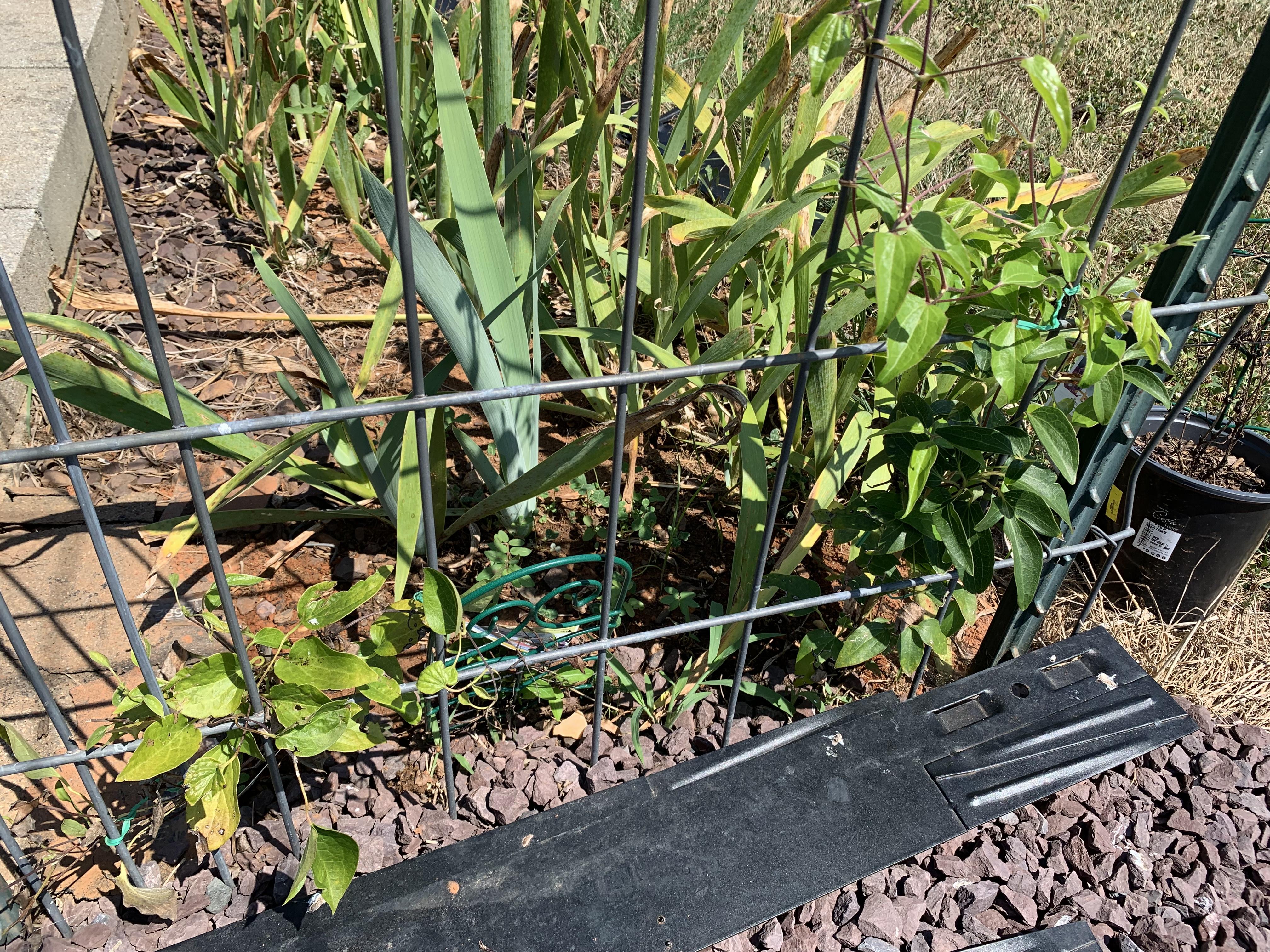D04E53FF A3D2 433C A2A0 76F1EA0CCC43 Dry garden