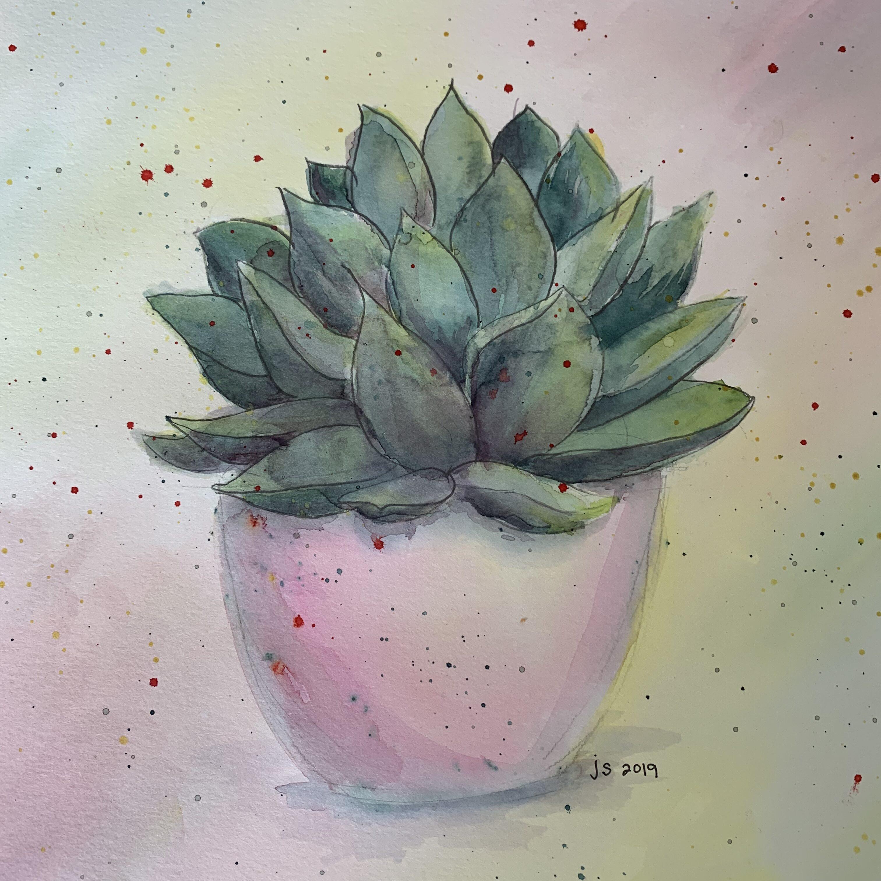 D185869F 6718 4DB5 8E8F 5165601AD7ED Succulent in a pink pot