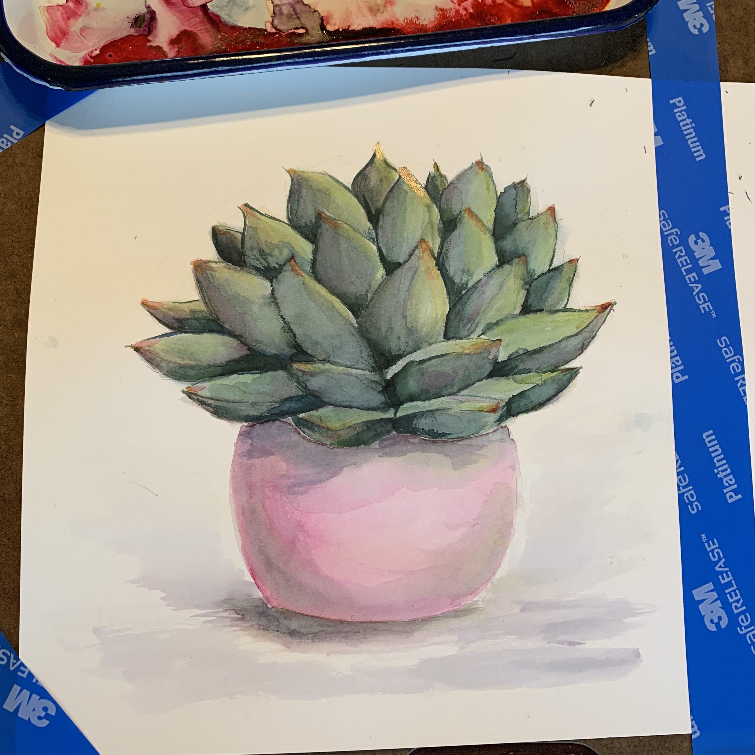 DB02B591 3E8F 4745 847B 0B267EC32762 Succulent in a pink pot