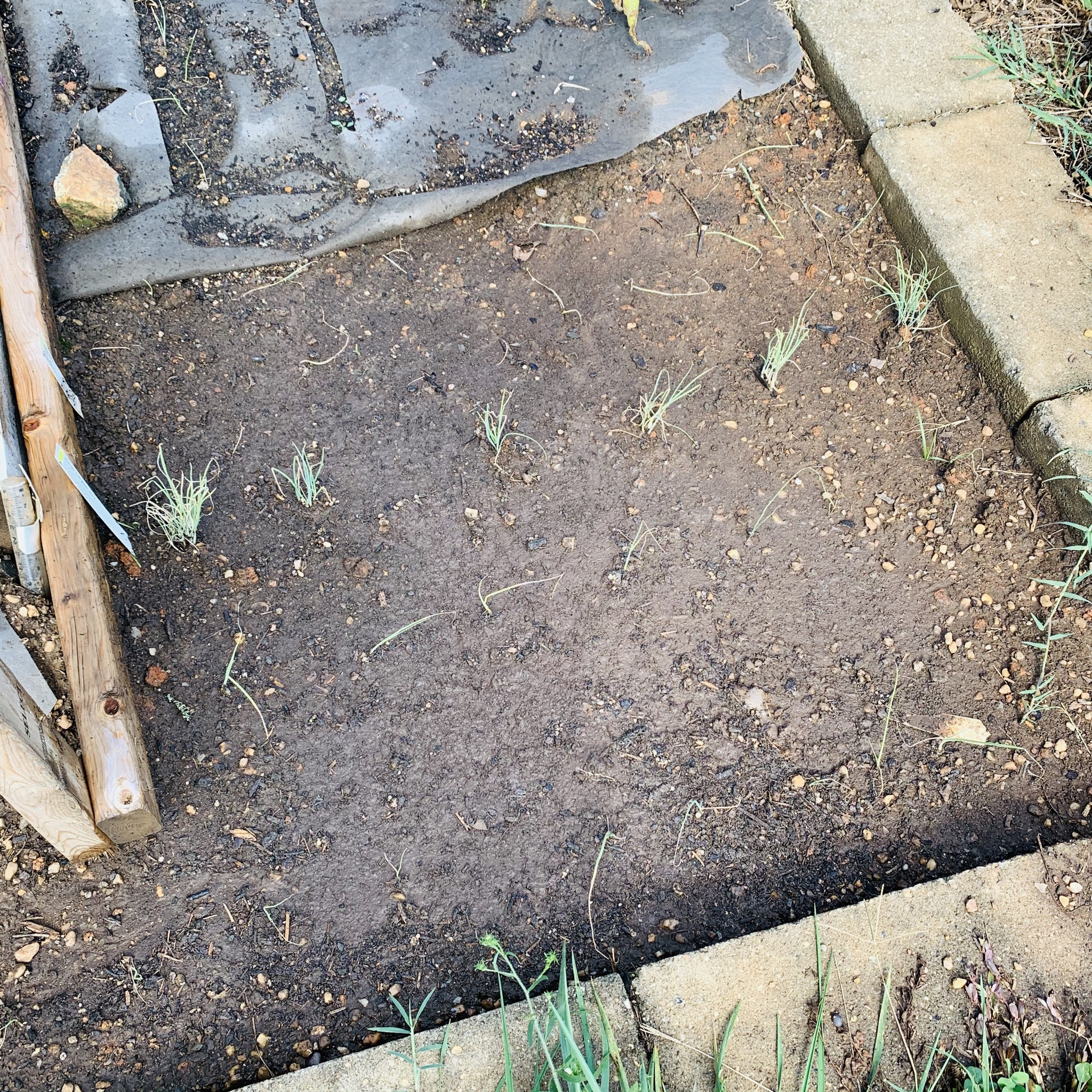 210017AE E4F6 4120 8107 EAEF12C53925 The garden is still producing