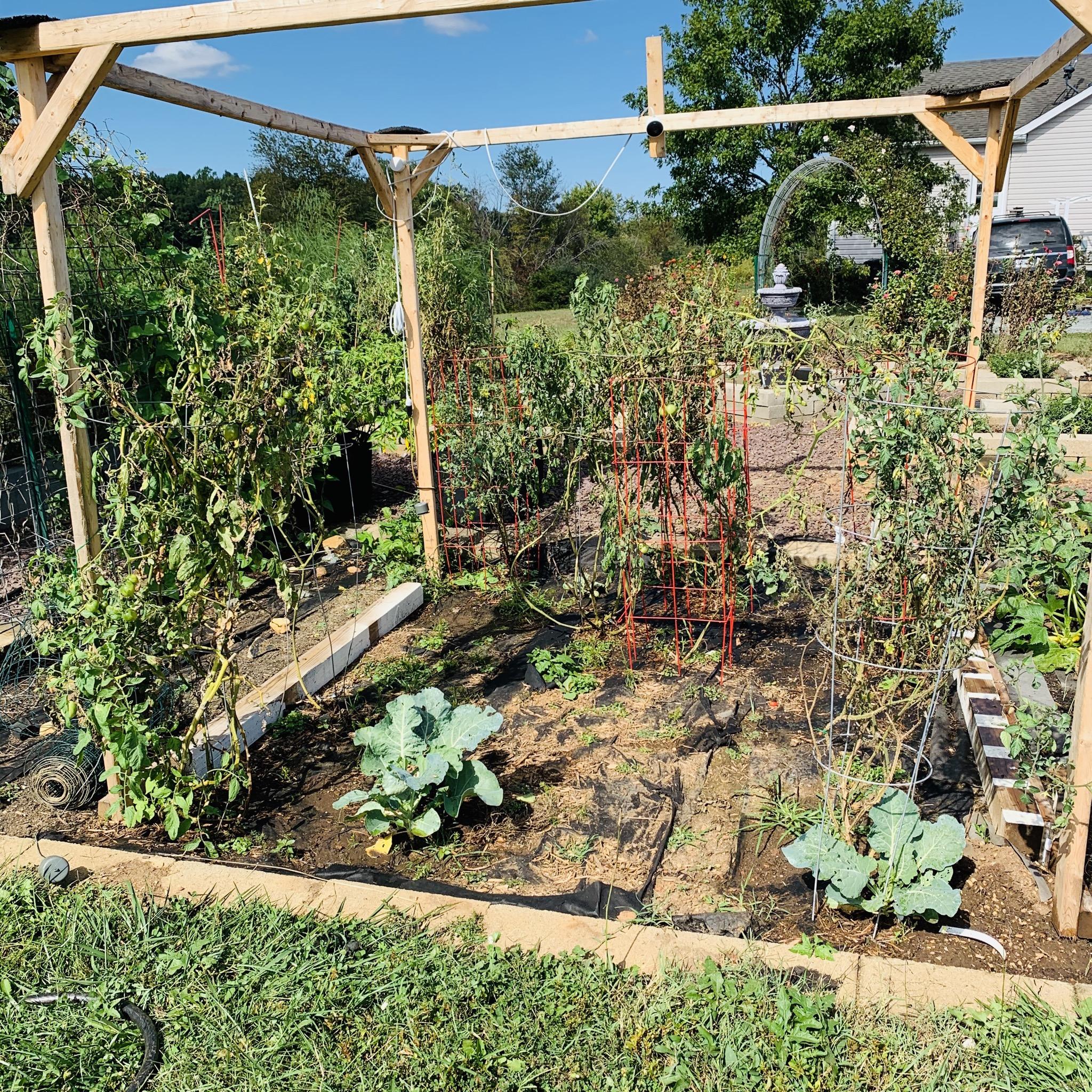 662EE47F 7D37 4E7A B479 3AFD53B532DF The garden is still producing