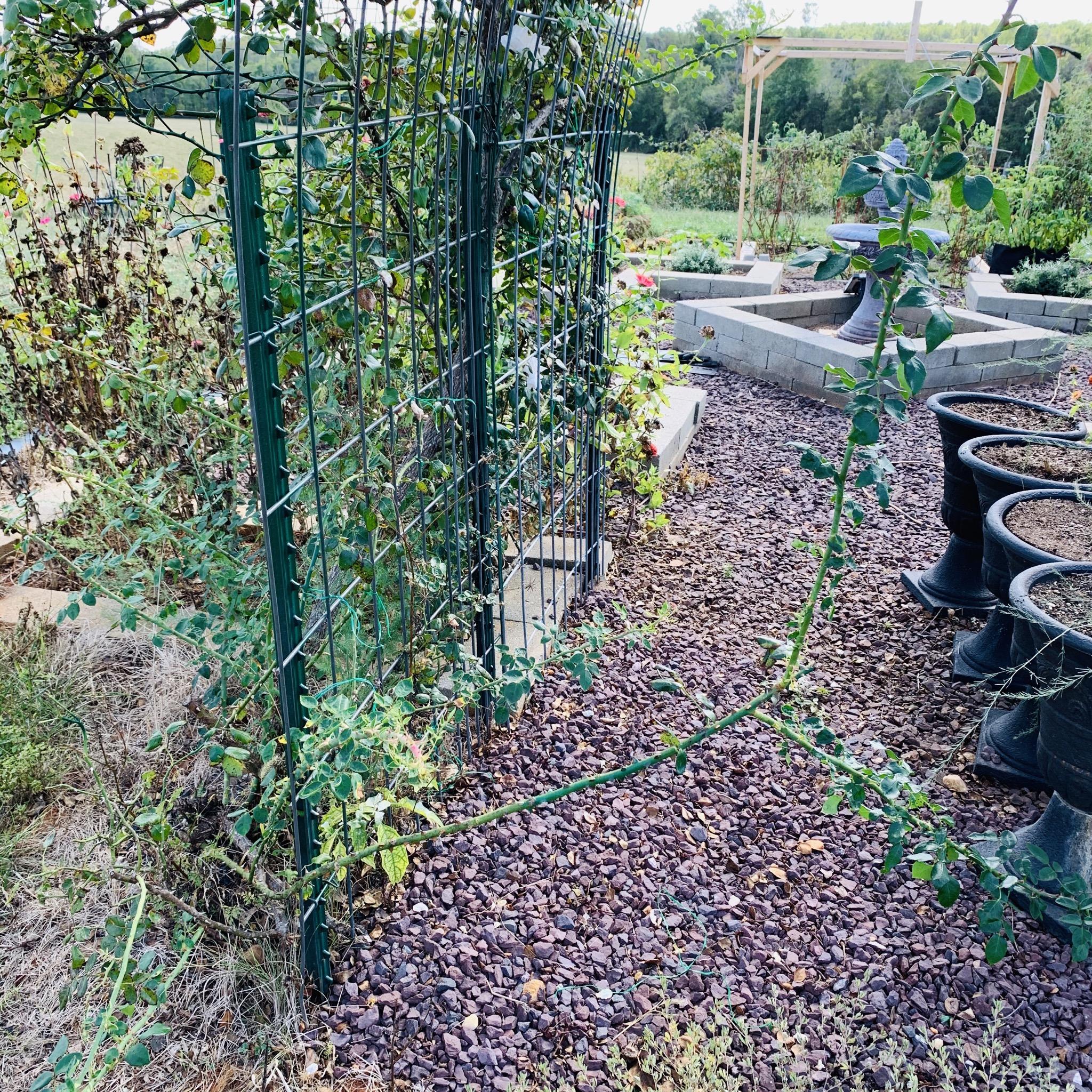 956E2298 8734 40D7 A0D5 29699A46F300 The garden is still producing