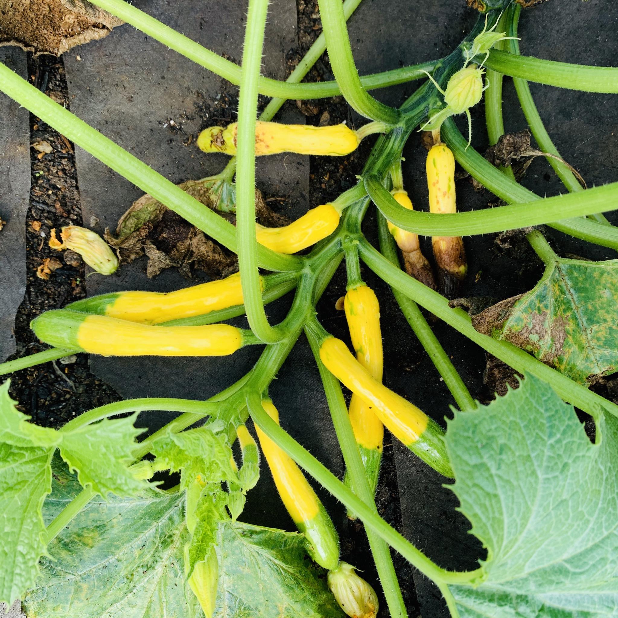 F0847E5B 2AEE 40E7 A257 A873D660D3CF The garden is still producing