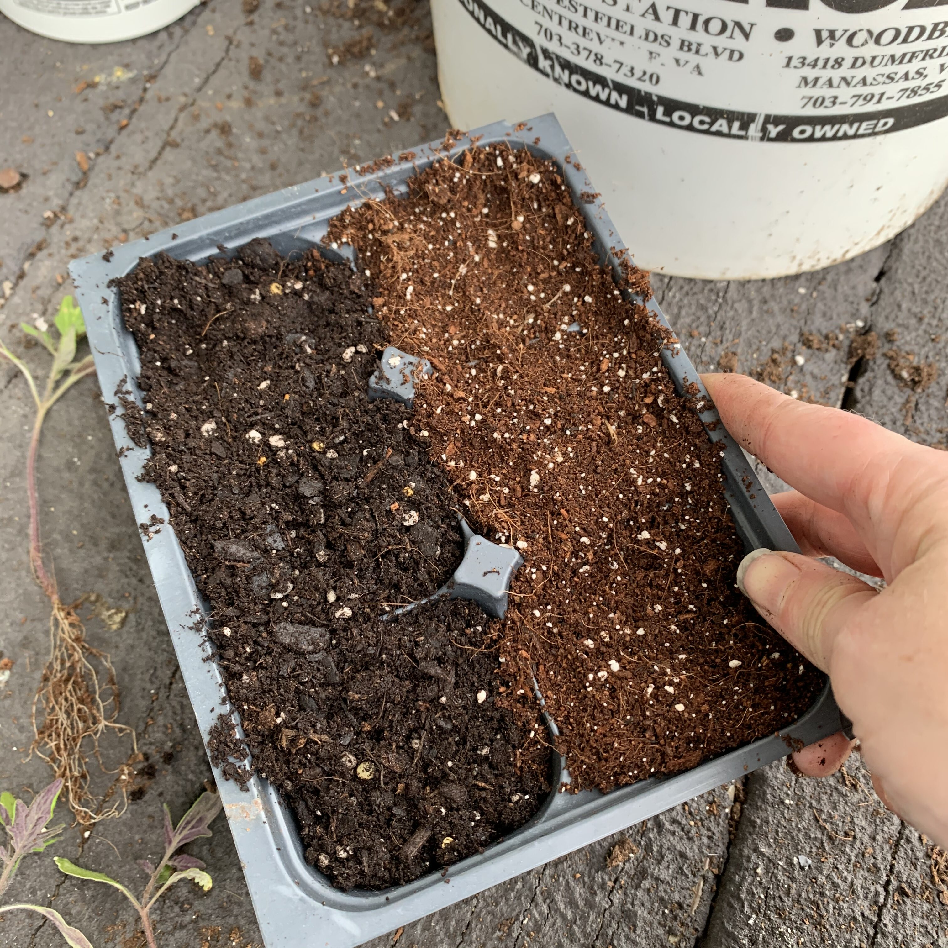 275508C4 A418 4D93 8B7D FB6BD63F6AF3 Comparing Burpee Organic Seed Starting Mix vs Miracle Gro Moisture Control Potting Mix for transplanted tomato seedlings - Results
