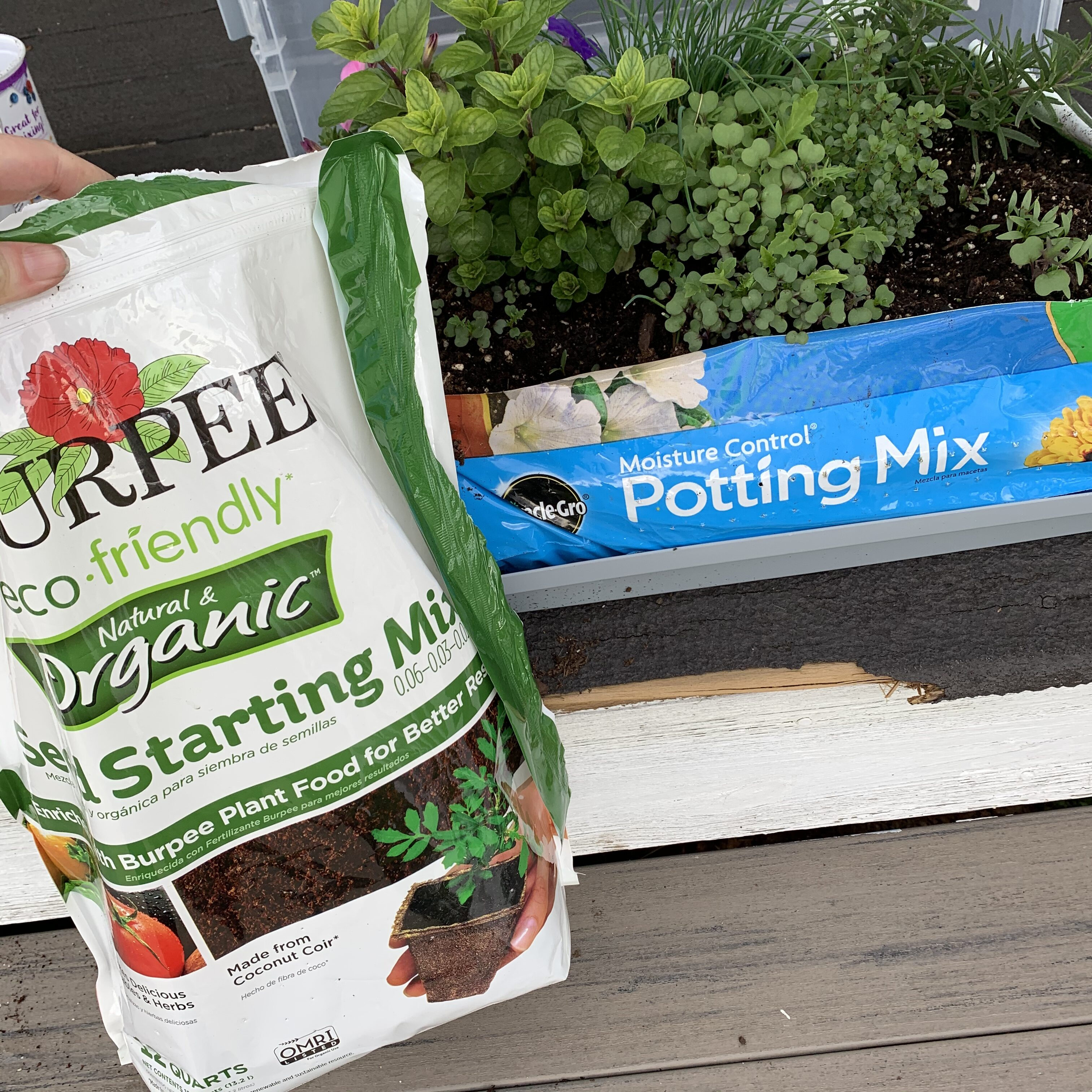 7BBBA1AB A805 46C7 8A31 068EA1B2E2AD Comparing Burpee Organic Seed Starting Mix vs Miracle Gro Moisture Control Potting Mix for transplanted tomato seedlings