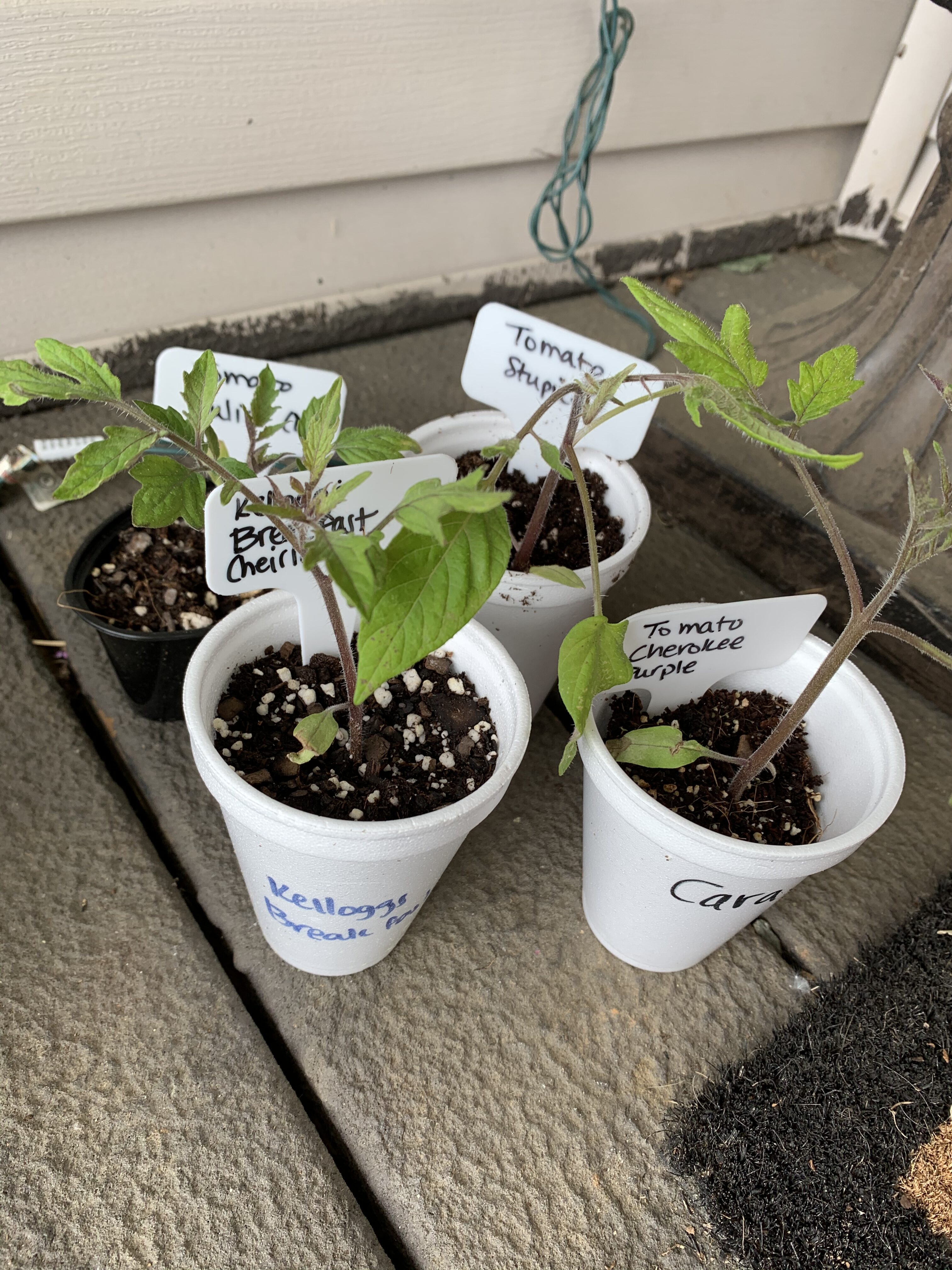 86D2C483 5AEB 4823 B4B7 10E13C8AA091 Finished drip line, planting, sharing