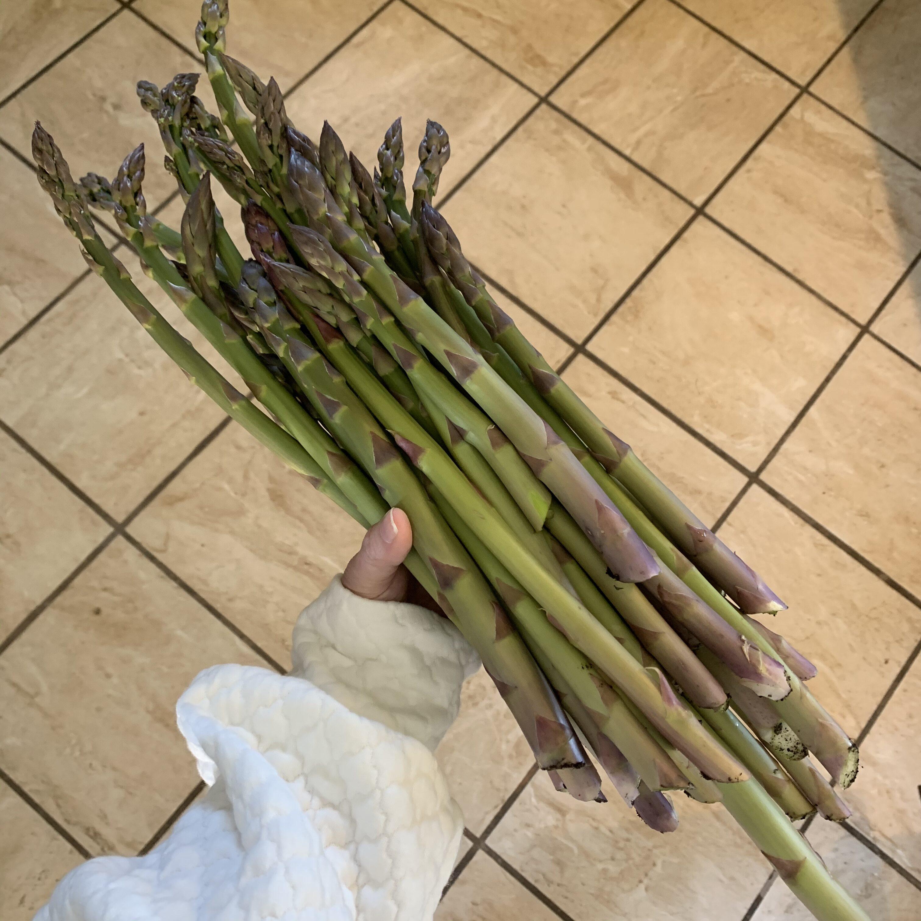 B24A7C15 9C13 4BE4 976B F0FEC57D7118 Lovely Asparagus!