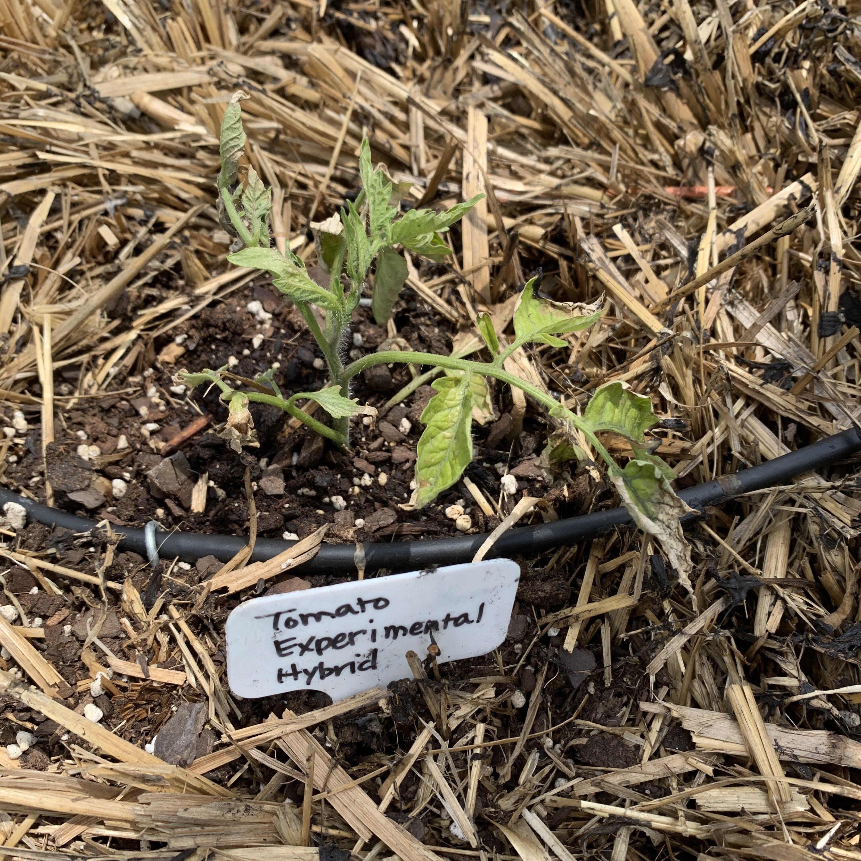000A1561 4B2B 49E8 B581 C6A44E08EC75 Cucumbers planted!
