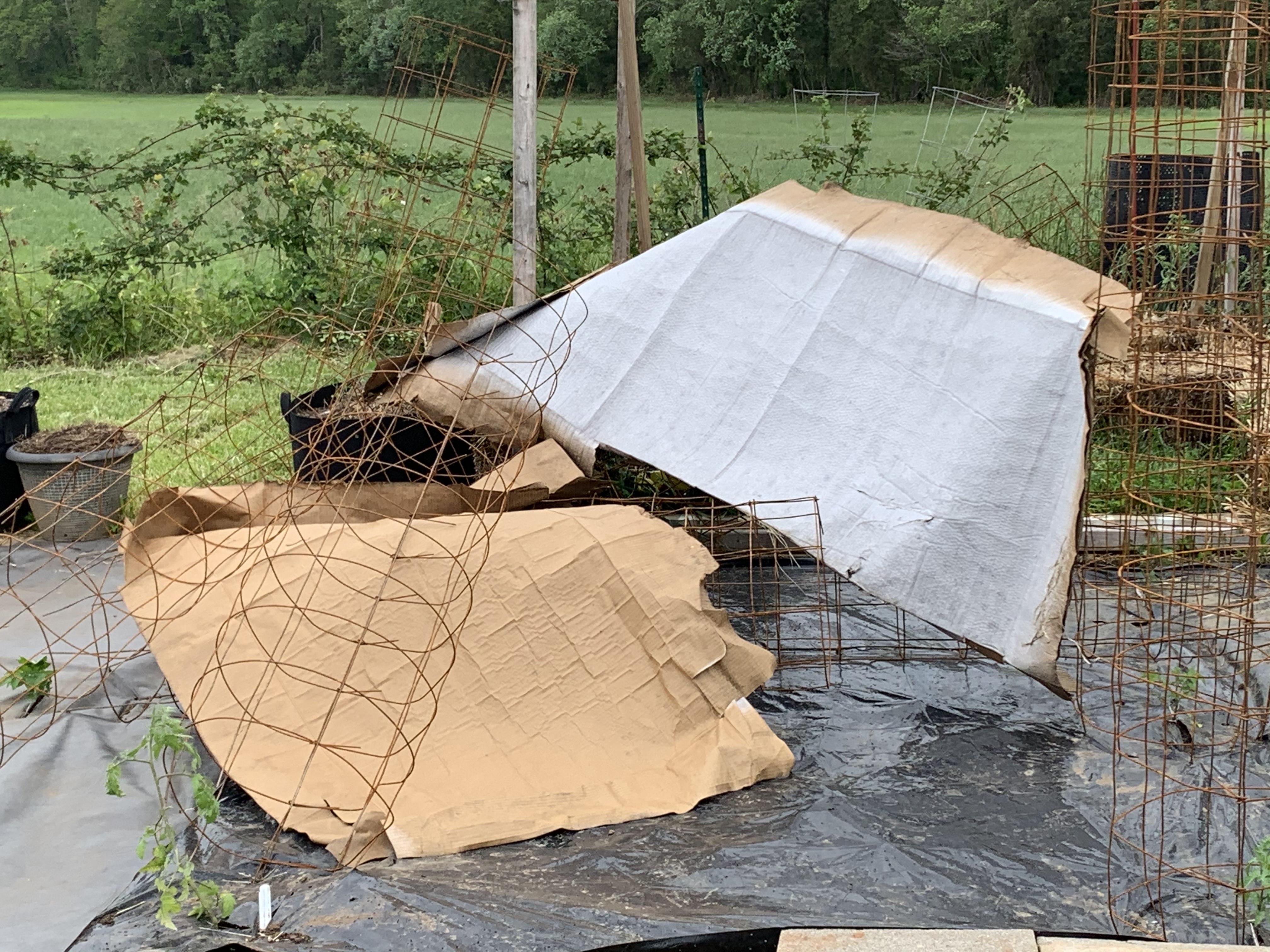 1482A2B3 AC06 4693 A87A FA1A81F76014 Cucumbers planted!