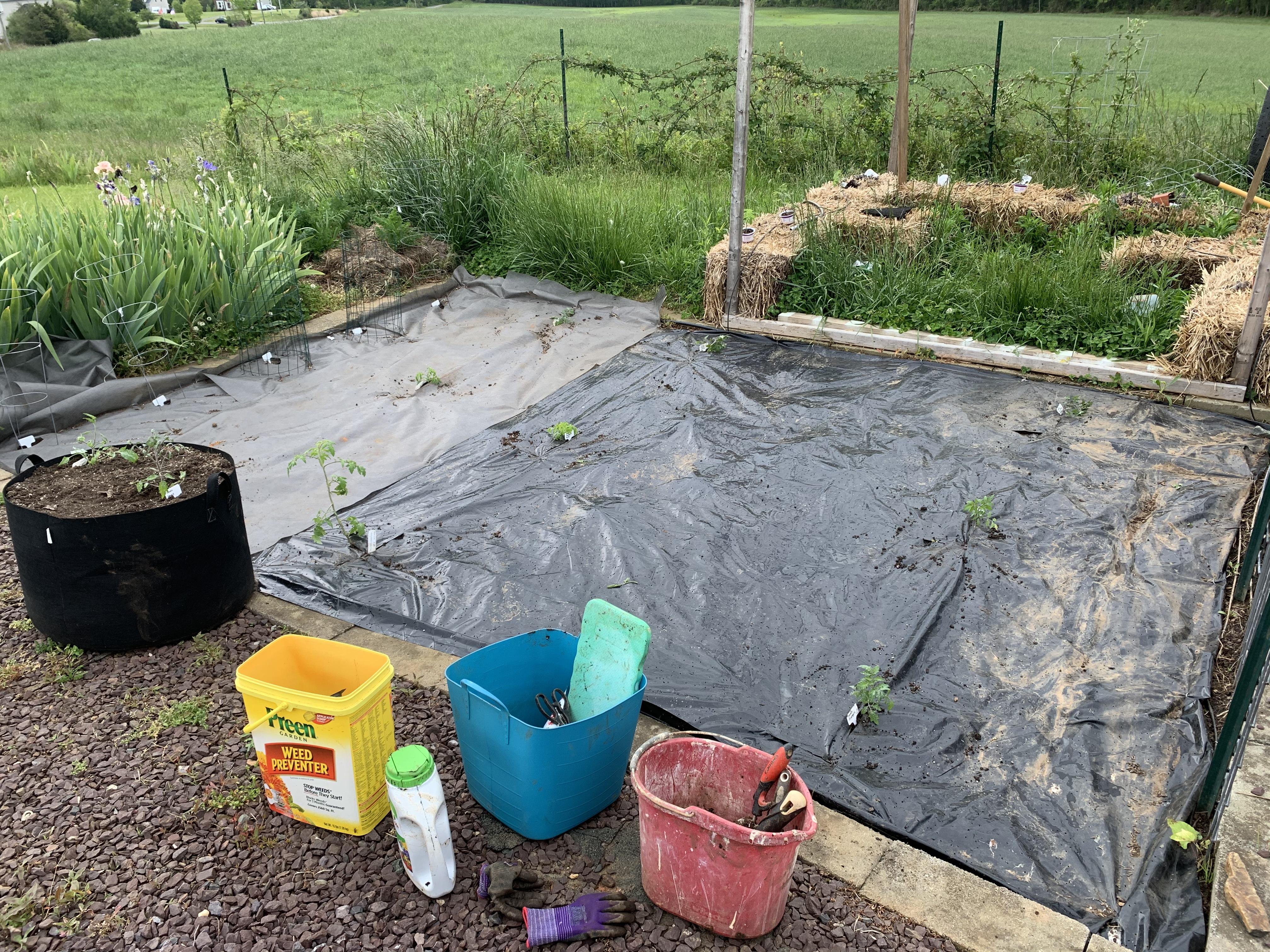 3652E315 FBB5 48DC 9C58 2926D4D06BC3 Tomato planting day!