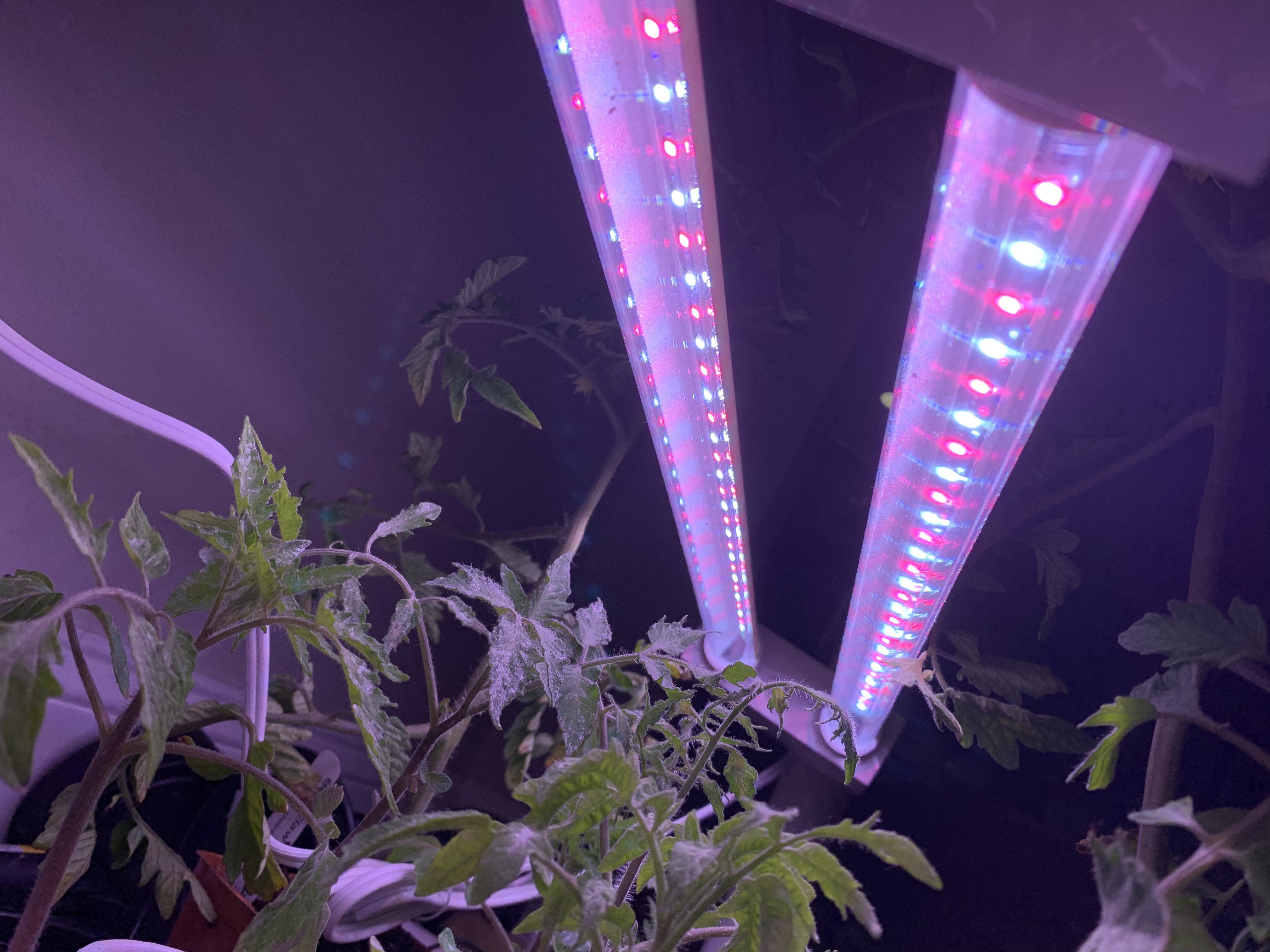3DAB4AEE ACD7 47B1 923C 95C1BB20FC7A Self-control when gardening