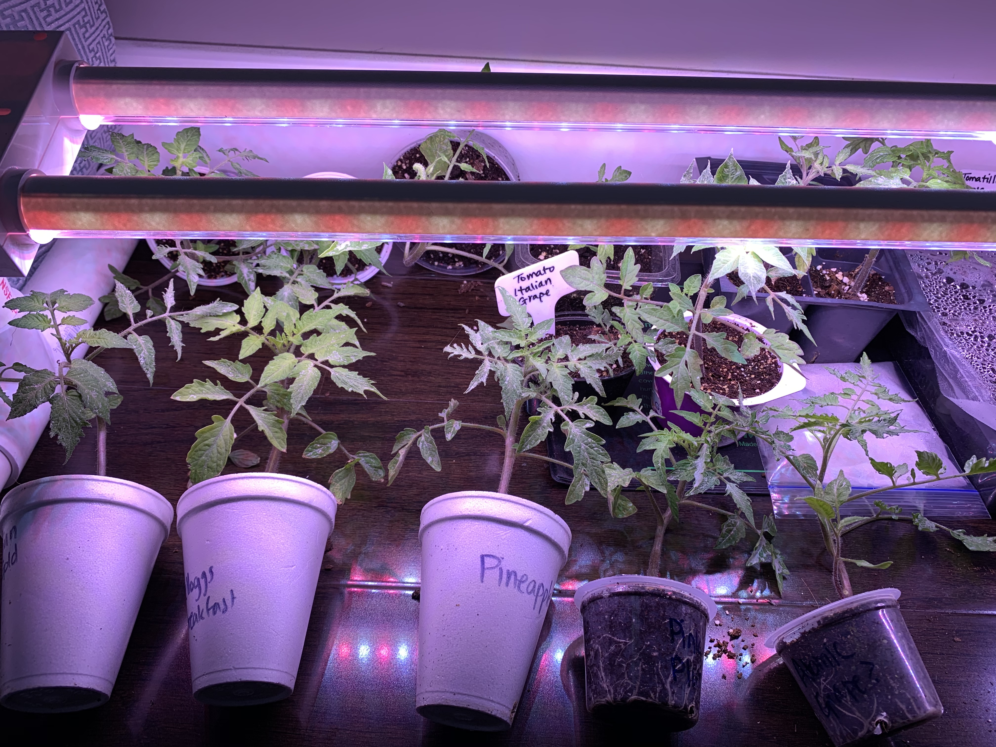 6F5B35C8 CCF6 4CA9 9CF4 07D6FB2ACF45 Self-control when gardening