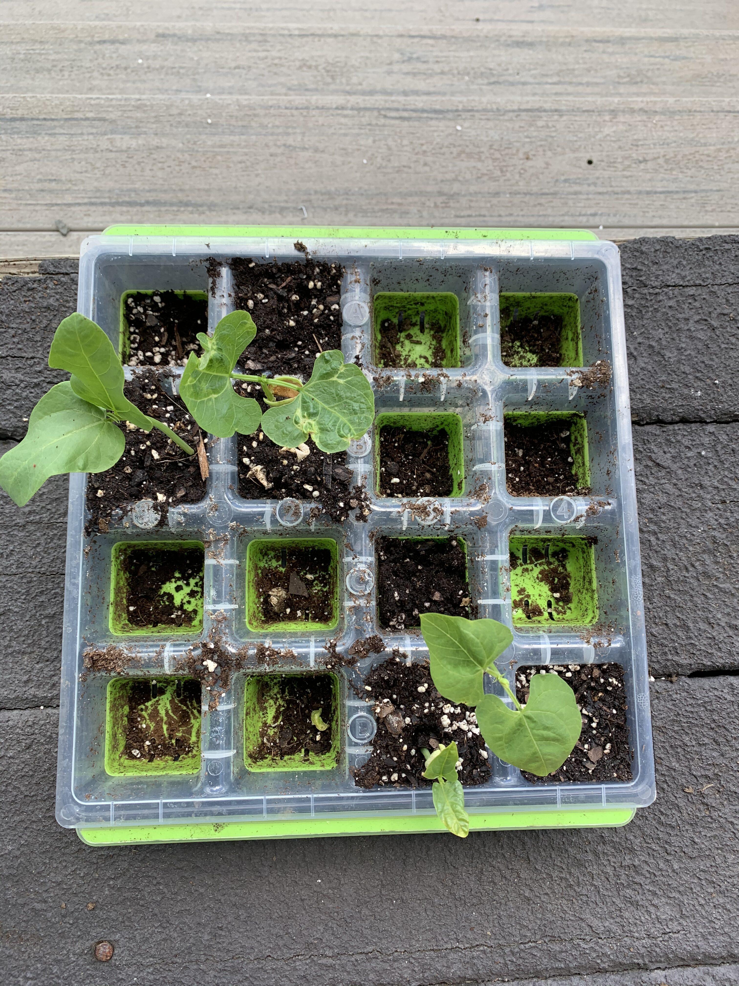 9285D3E0 0A52 4407 B05A 9A2C4FD8454F Cucumbers planted!