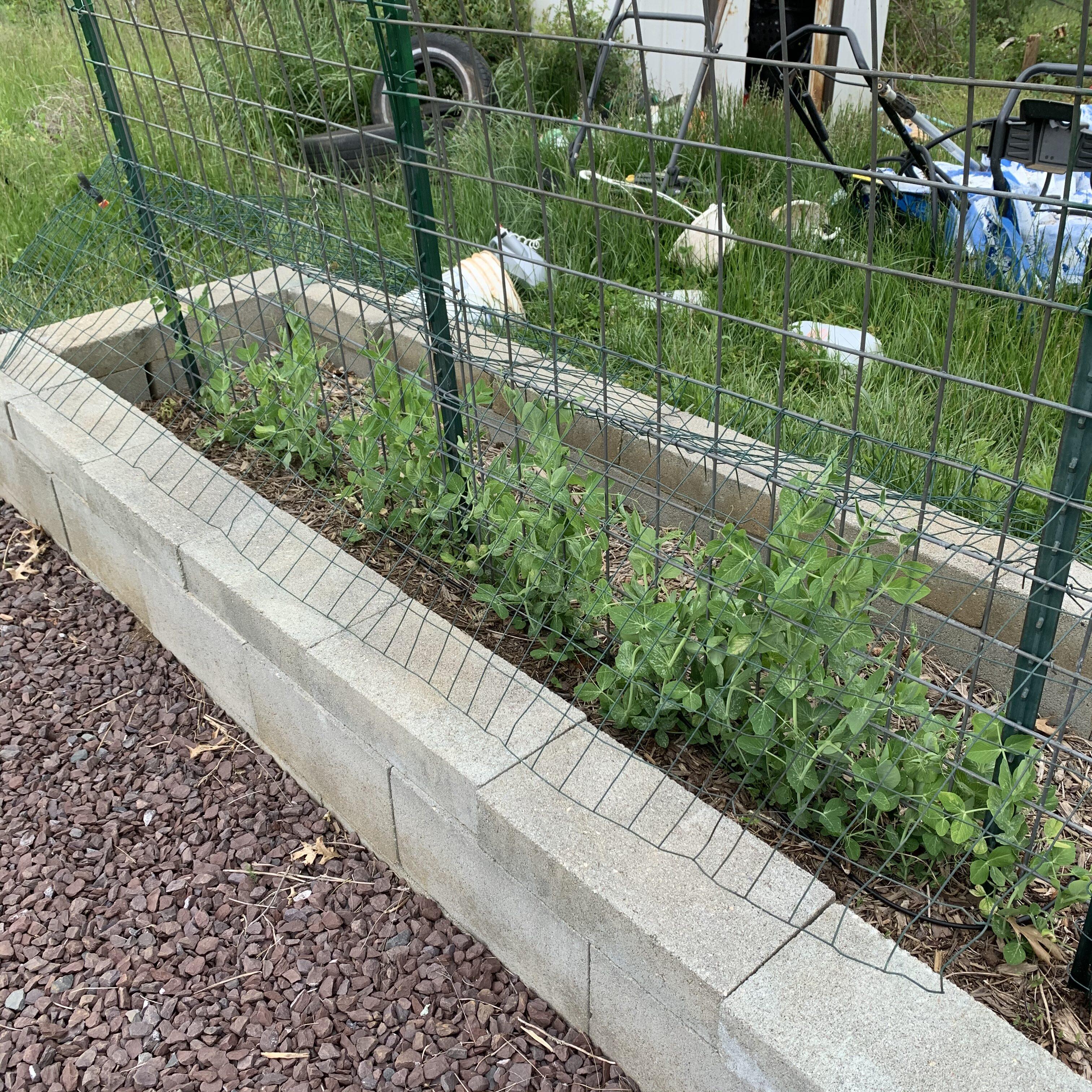 B6B6E704 7818 4BE7 8606 C16B61FCFC79 Tomato planting day!