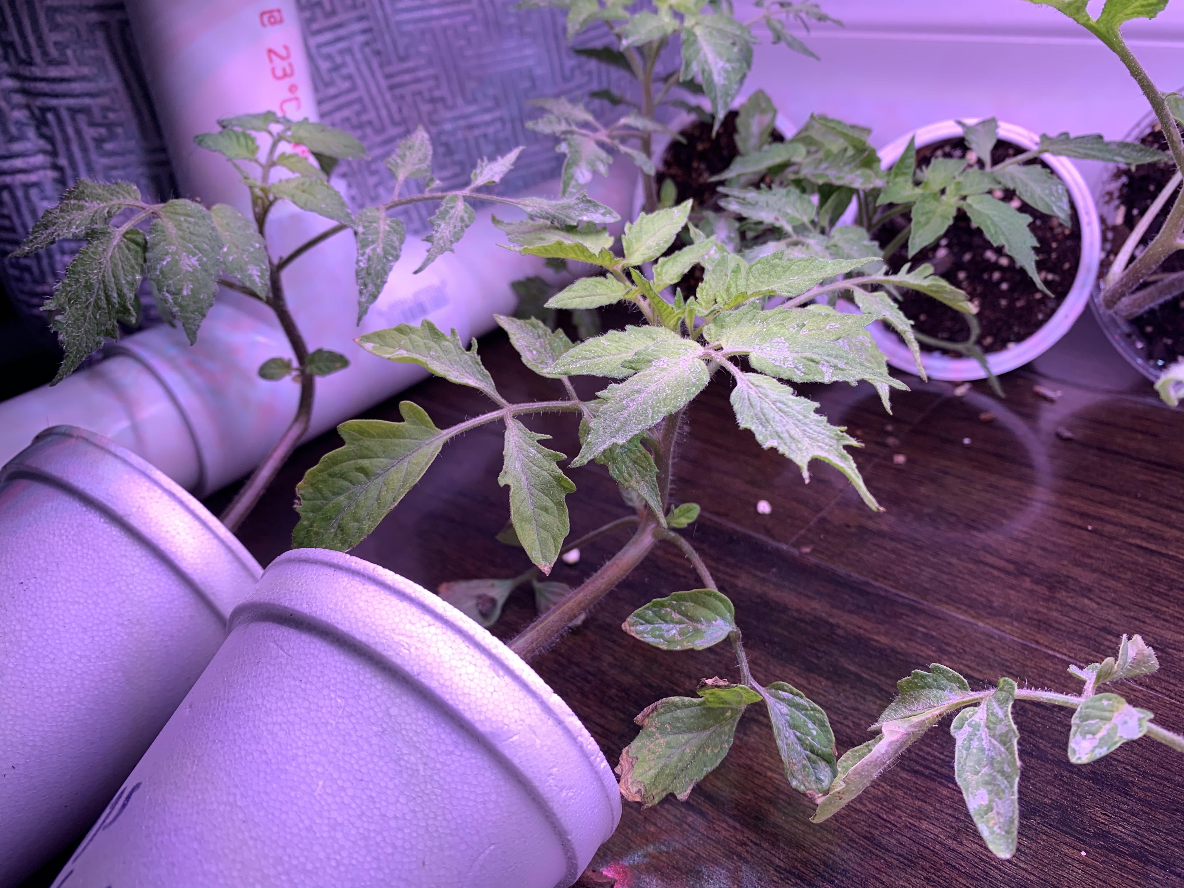 C6EE6022 3142 471A 9C94 3D1E42FD9BFB Self-control when gardening