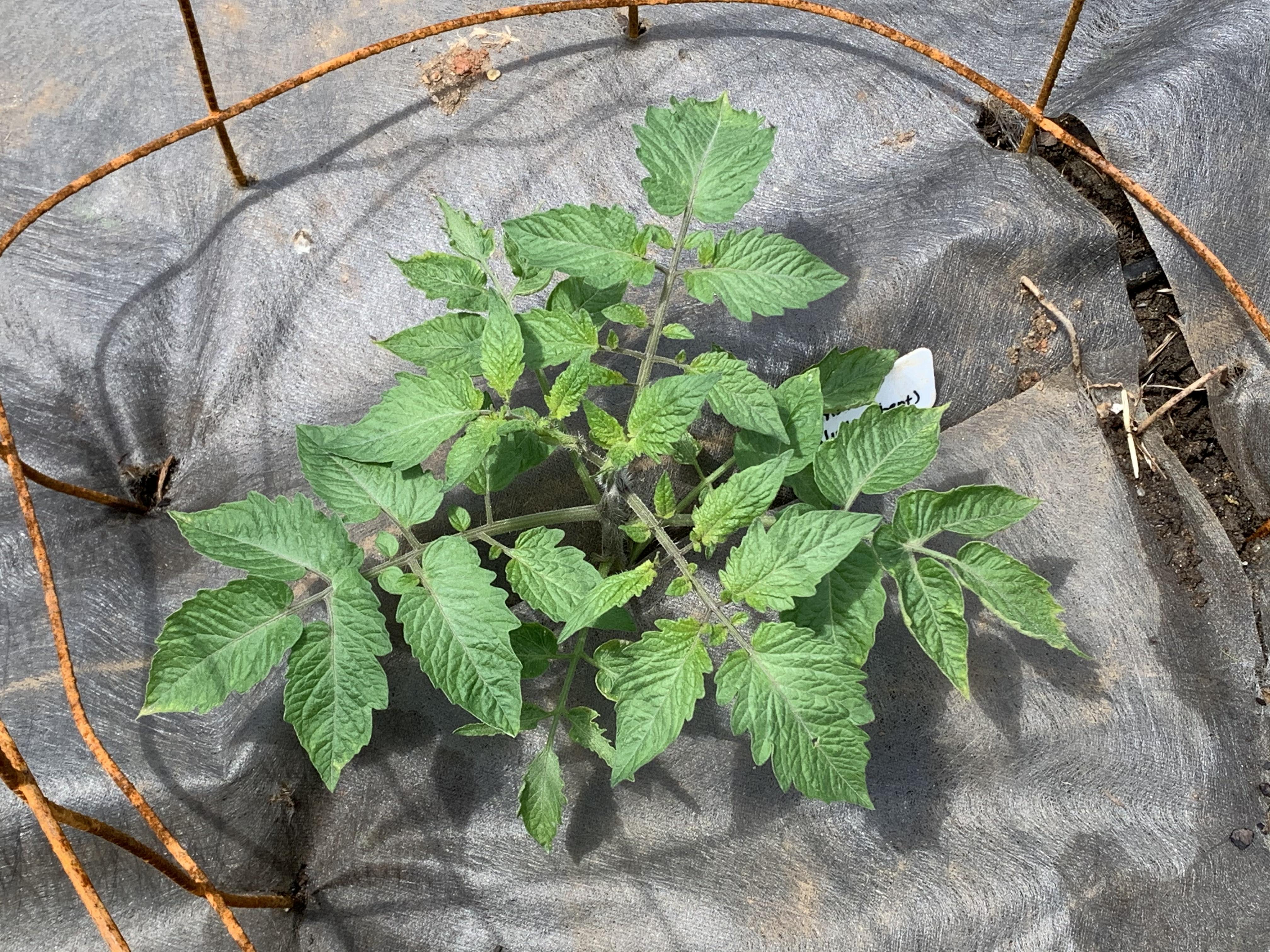 CE172117 C996 462F 910A 0D6937F3C501 Cucumbers planted!