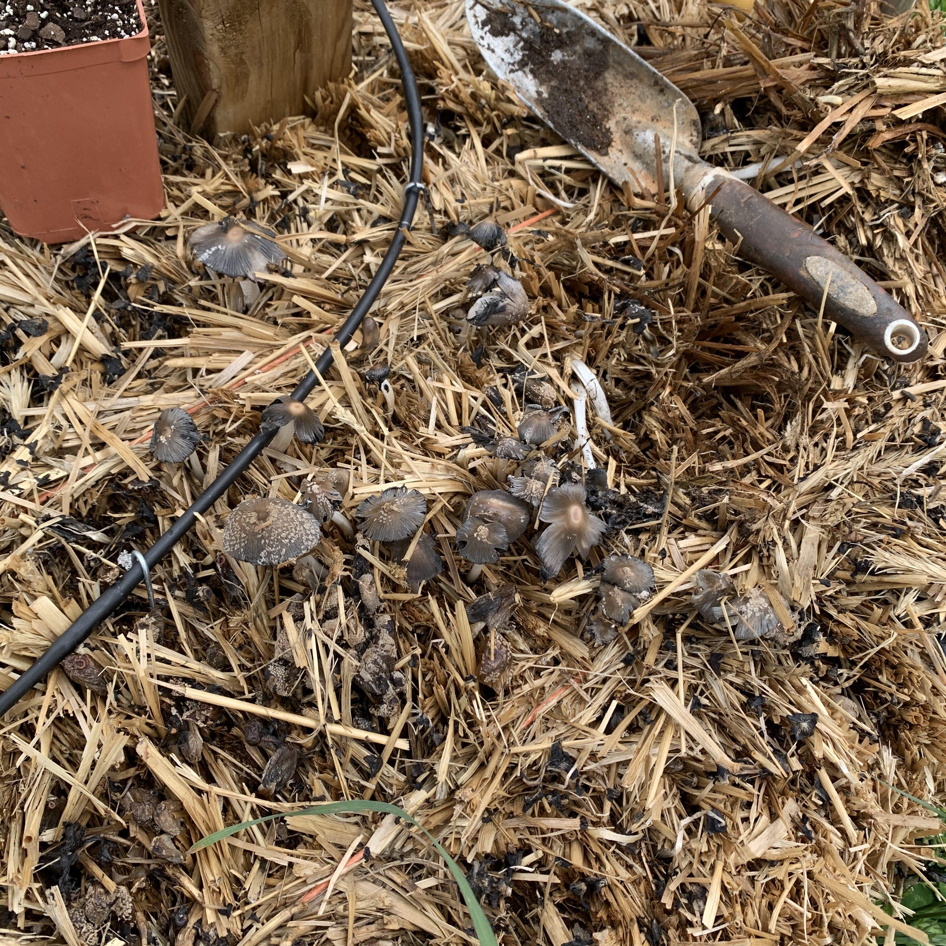 E34E76FB 60F3 4F0E B959 CF52DA587CC1 Tomato planting day!