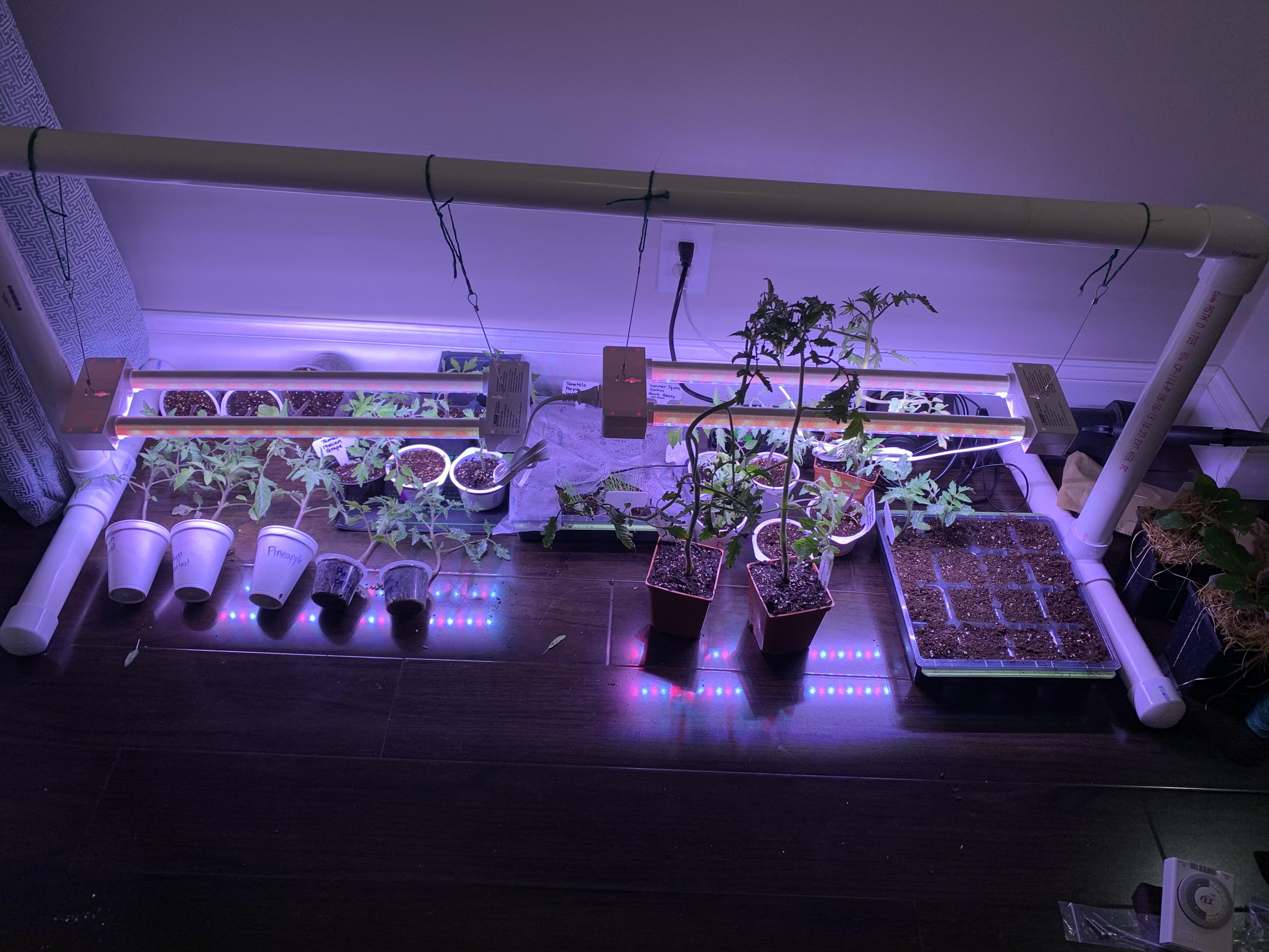 EF516728 3C5E 47F9 9952 53135909EE32 Self-control when gardening