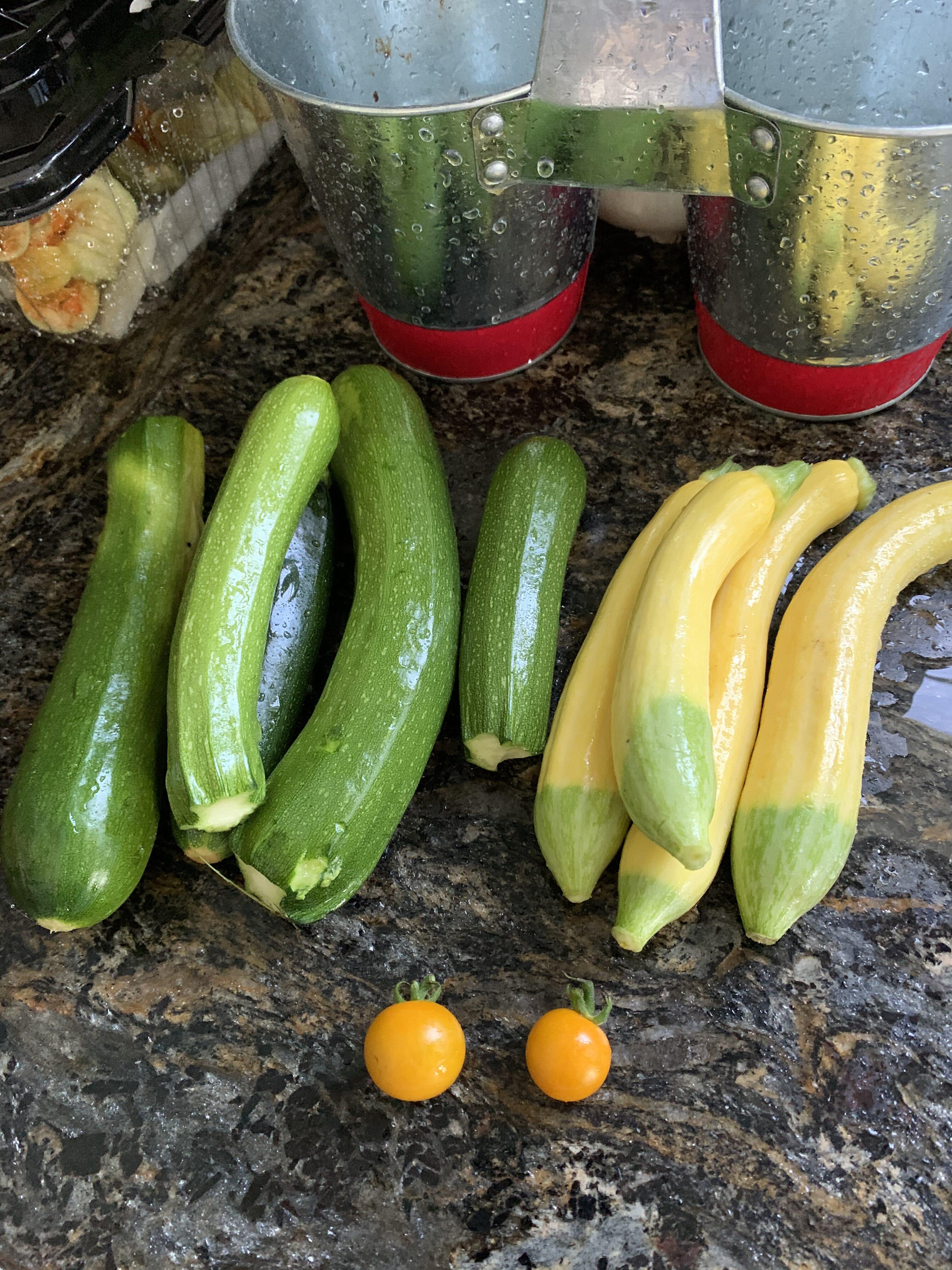 CE7F3691 E40F 4756 9B6B 3AF56B71C8D9 Can you have too many tomato plants?