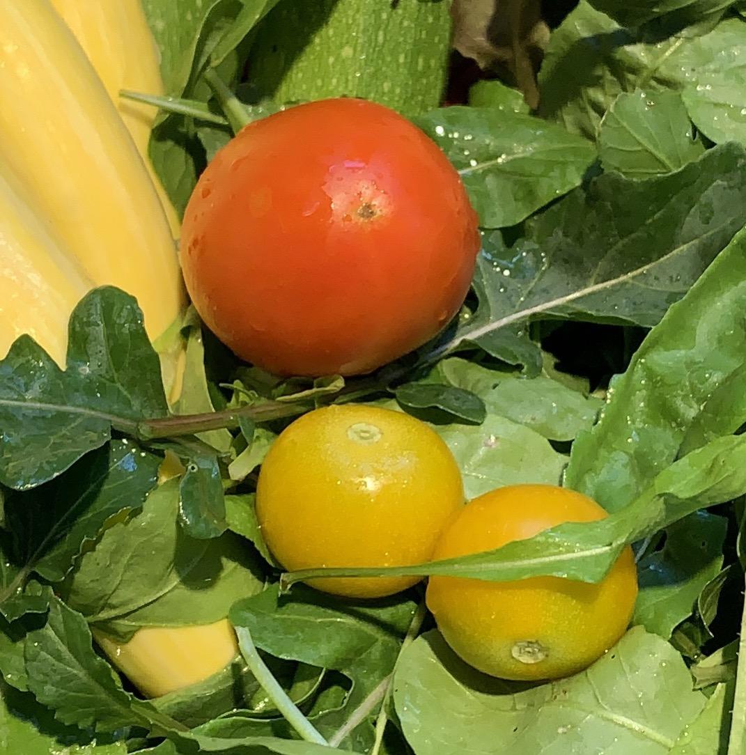 54D42014 55ED 462F B062 FEB18DC6E898 Fourth of July Tomato!