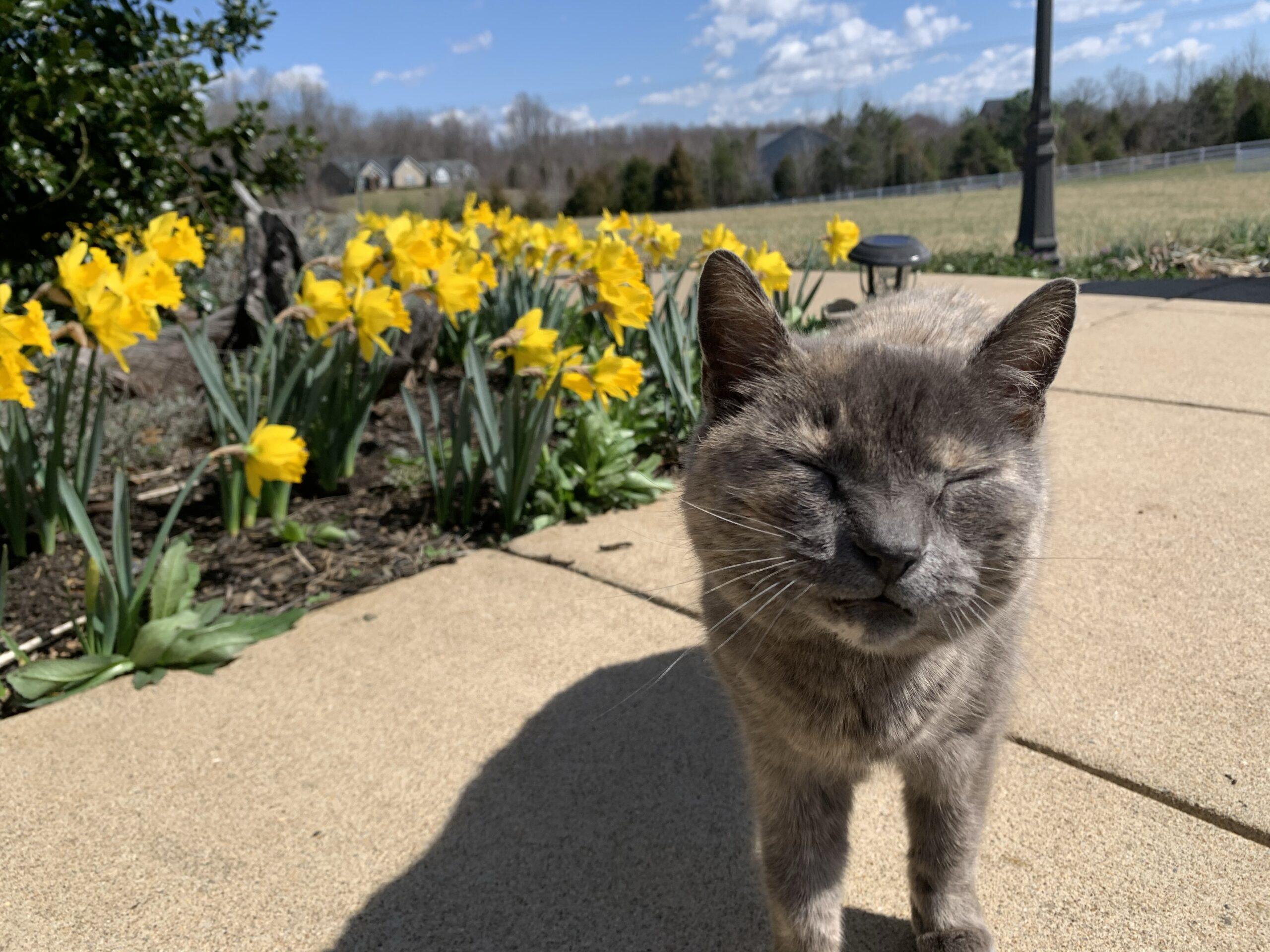 img 4919 scaled Daffodils!