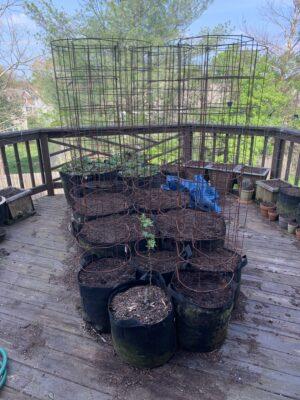 img 5278 Deck Garden Refresh