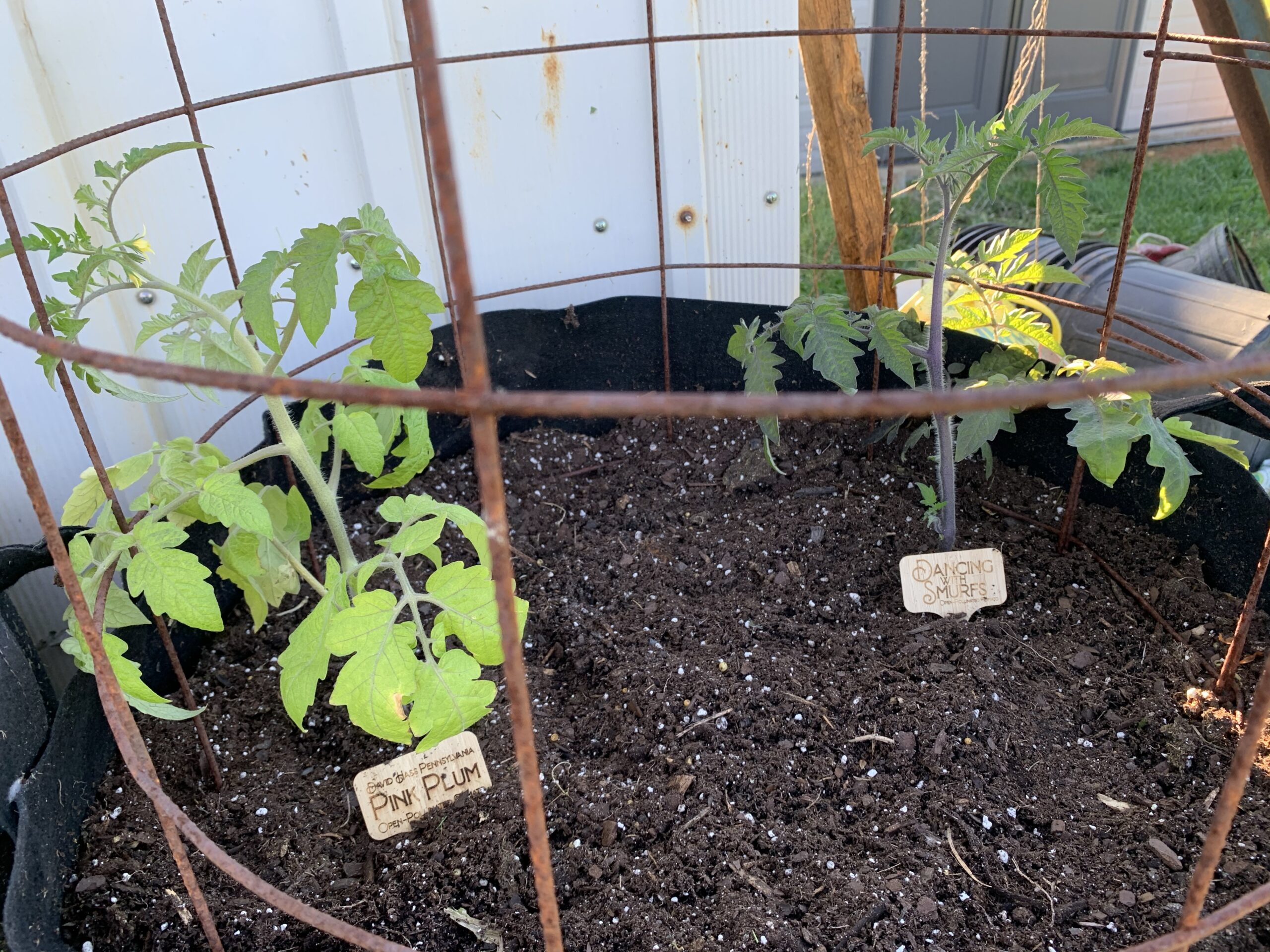 img 5567 scaled Tomato Planting Day